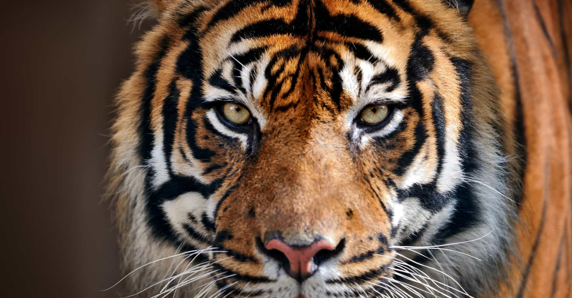 Imminent risk: the animals closest to extinction