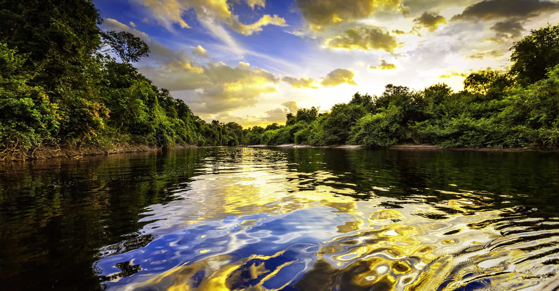 The Amazon: the lungs of the planet