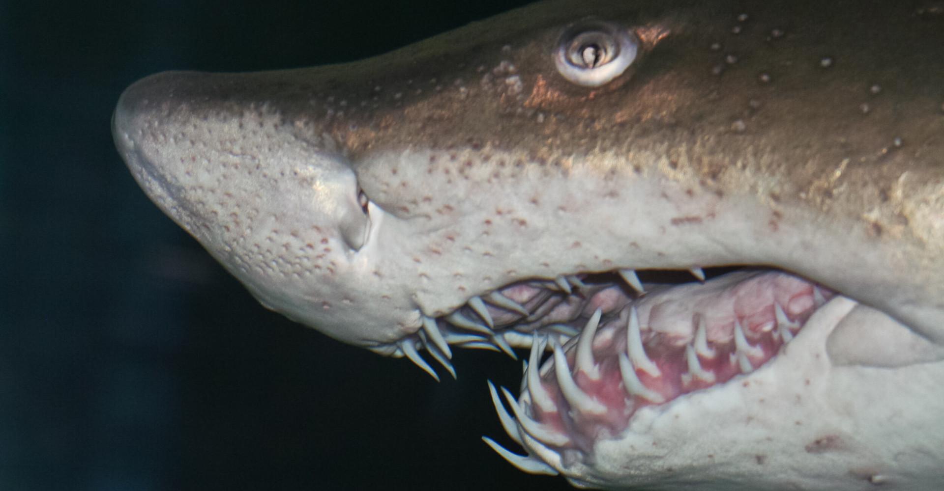Feroci, spaventosi, pericolosi? No, sono solo animali inoffensivi!