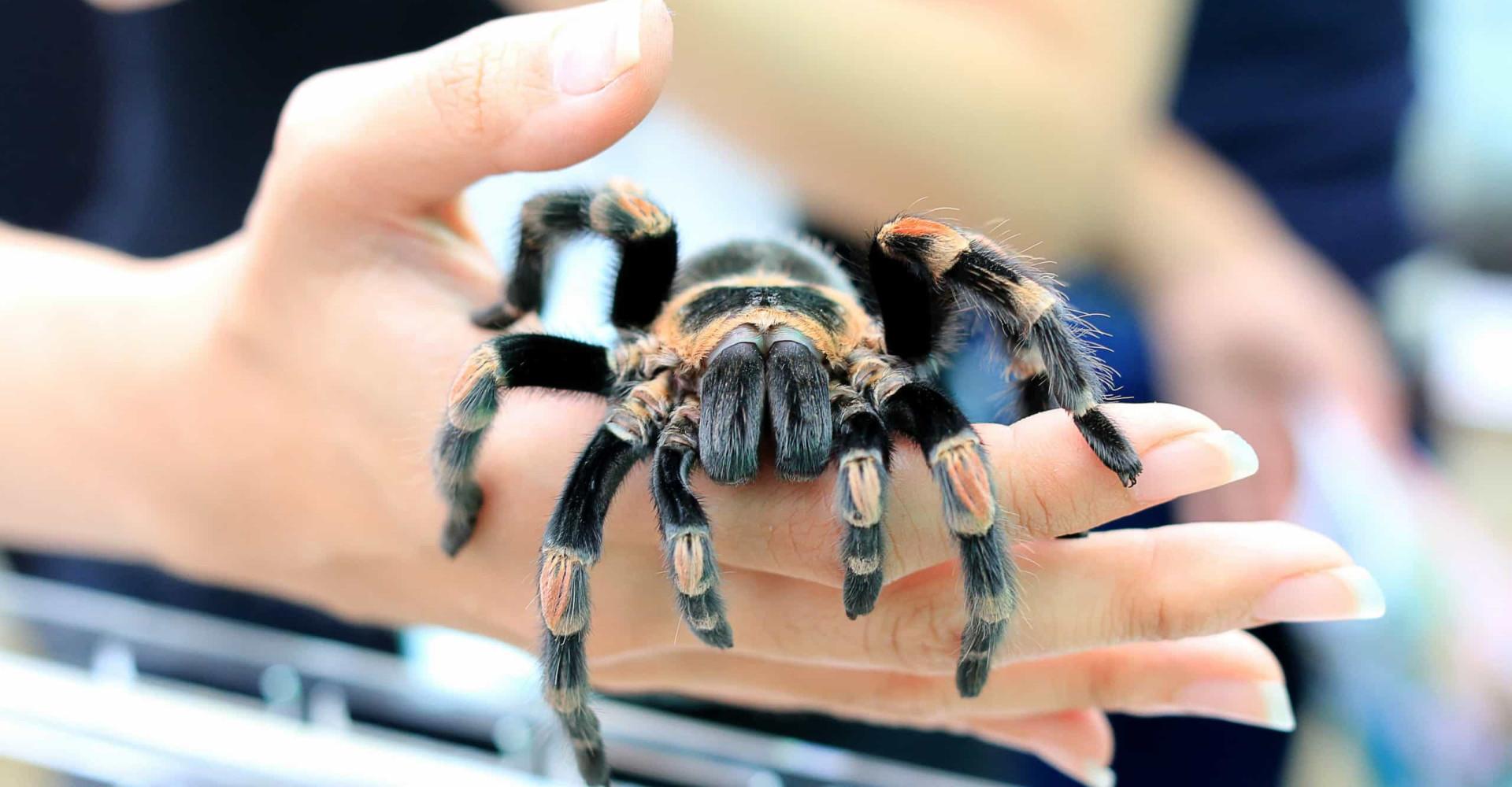 Las arañas más venenosas del mundo