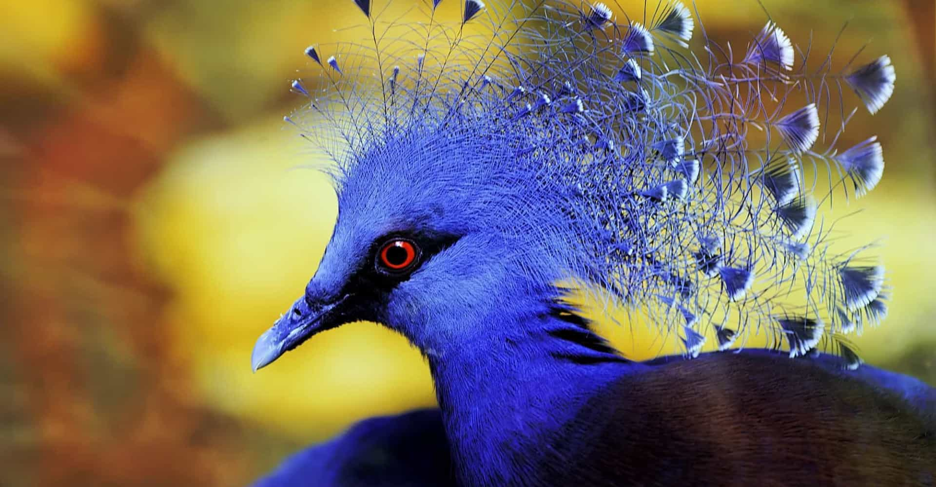 The most exotic birds on Earth