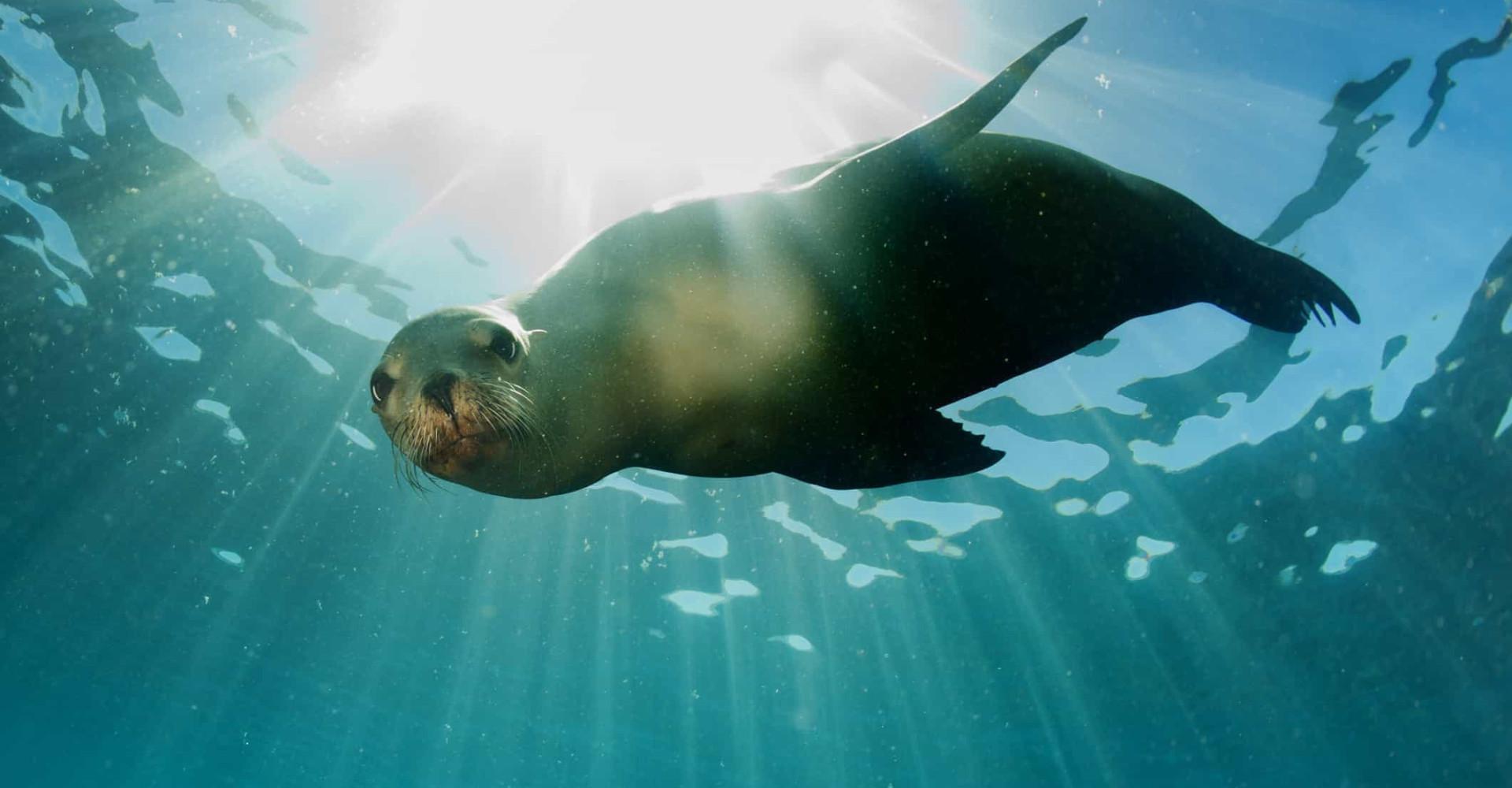 The world's most incredible aquatic mammals