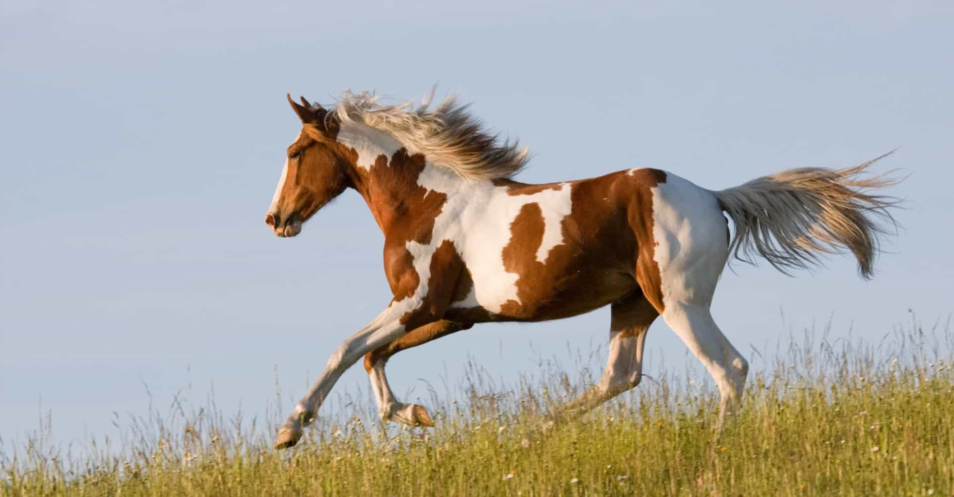 American horse breeds and where to see them in the wild