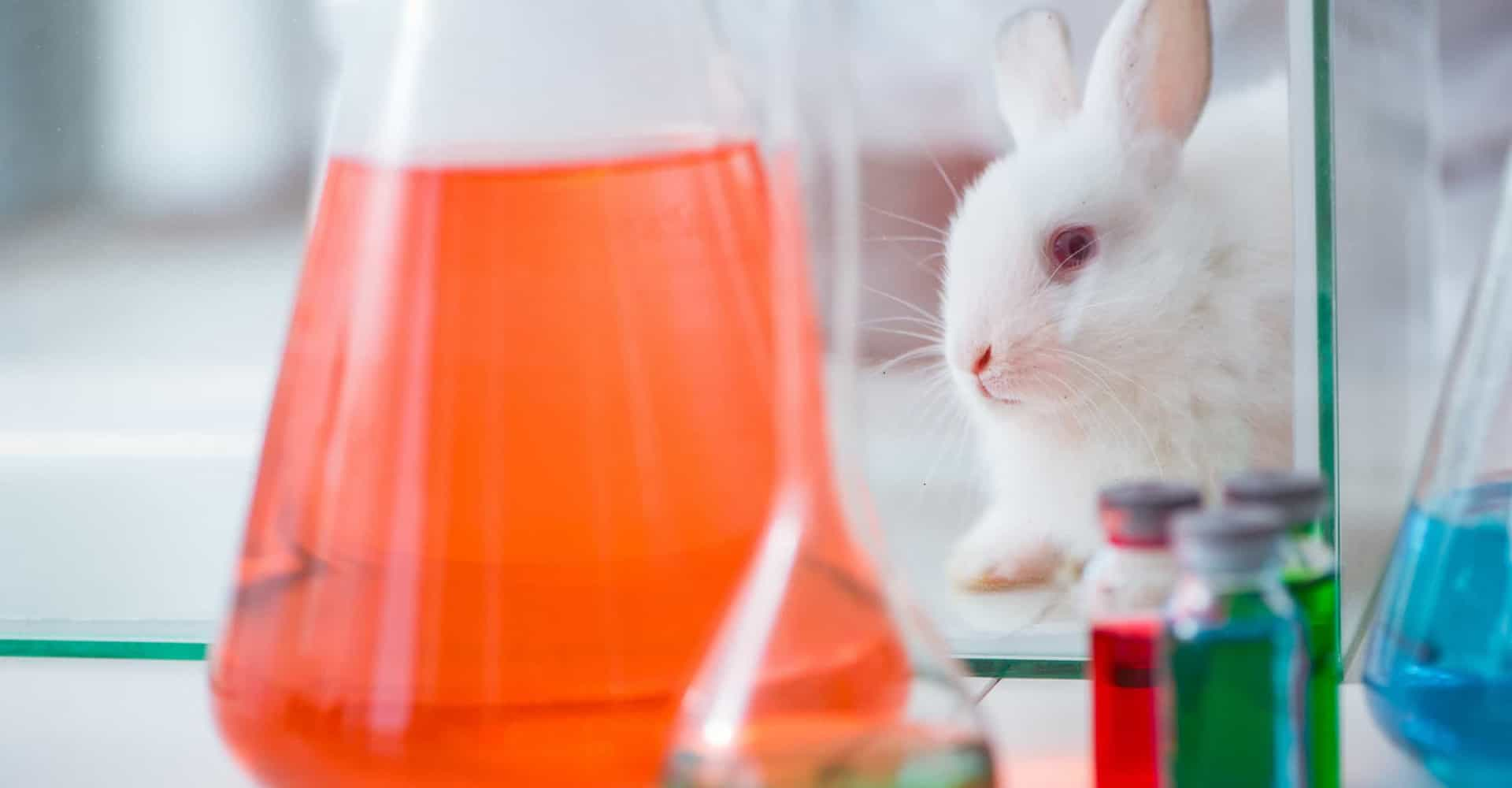 Is animal testing a necessary evil?
