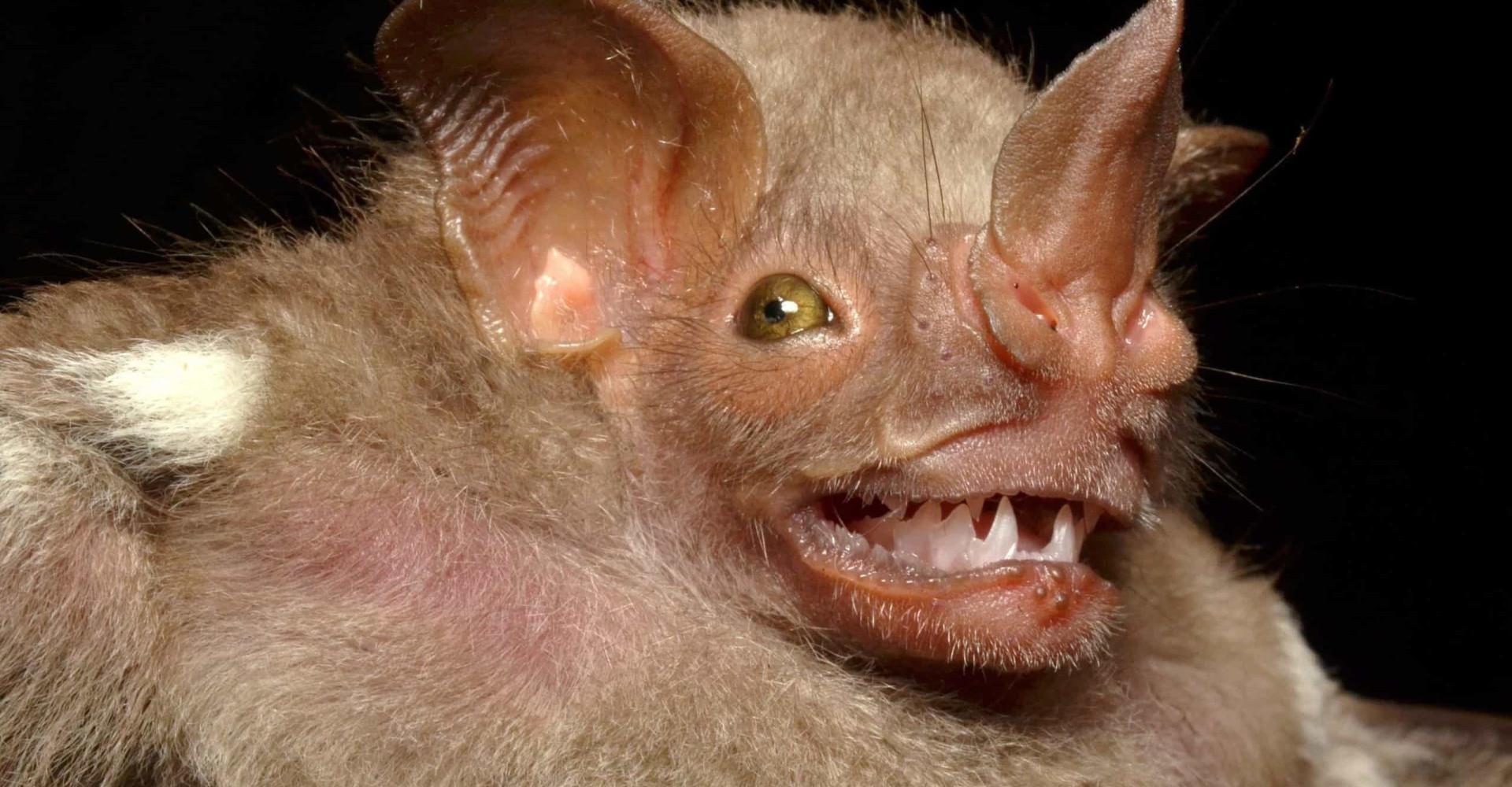 Ovatko nämä maailman rumimmat eläimet?