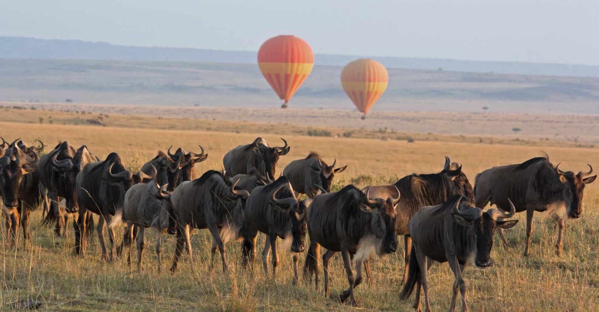 Las migraciones más extraordinarias del reino animal