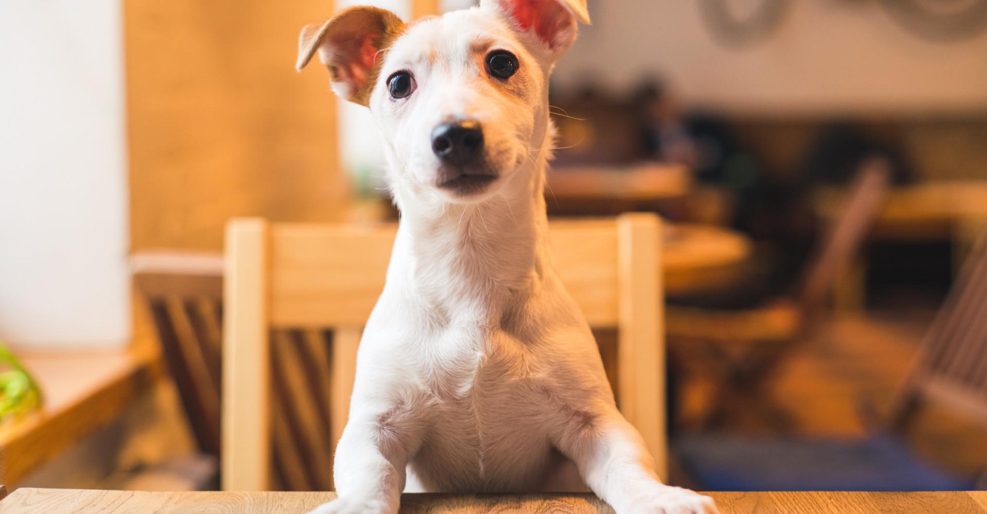 Le premier café chiens d'Europe a ouvert en France!
