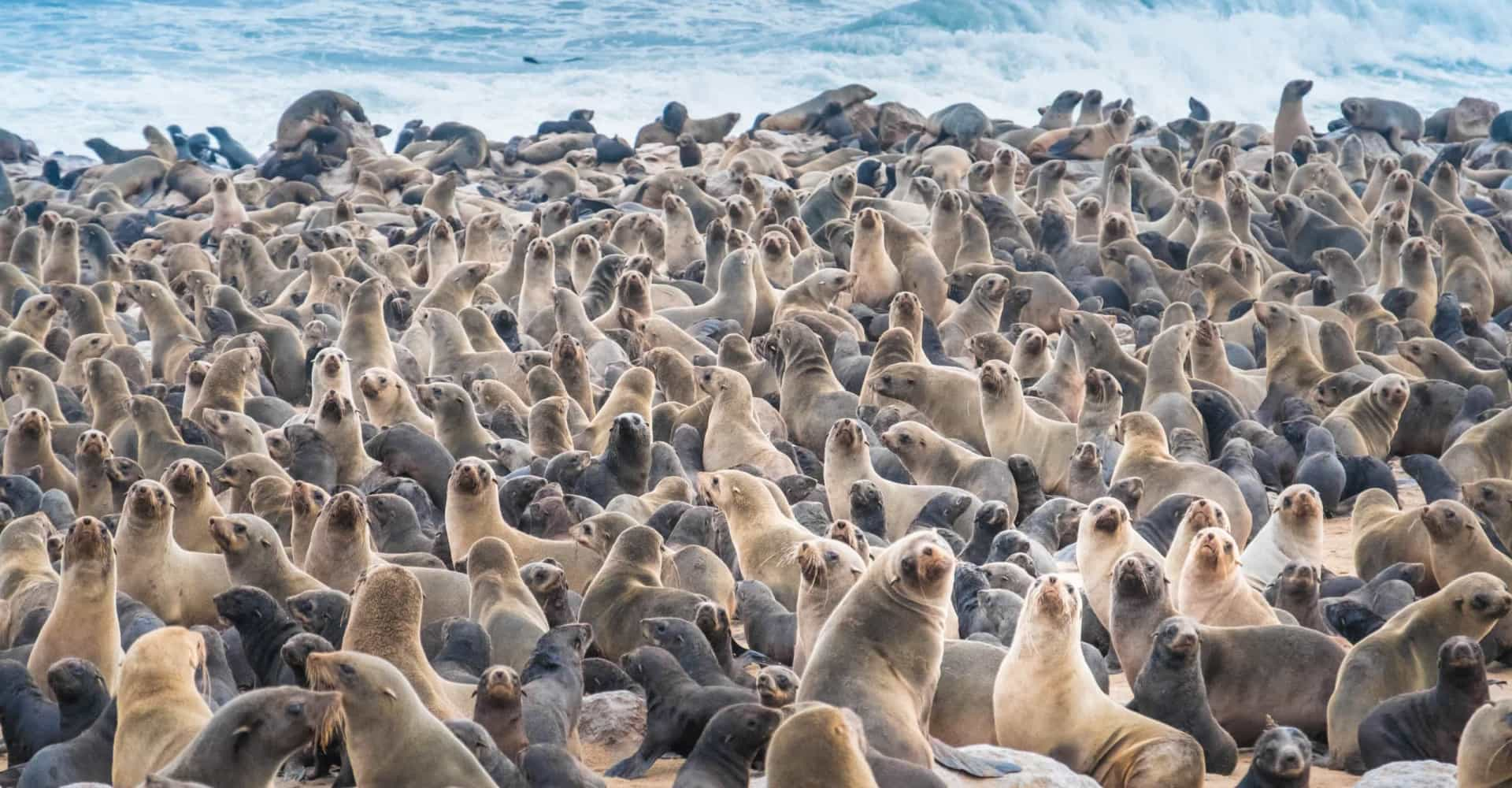 다양한 동물들이 살고 있는 매력적인 관광지