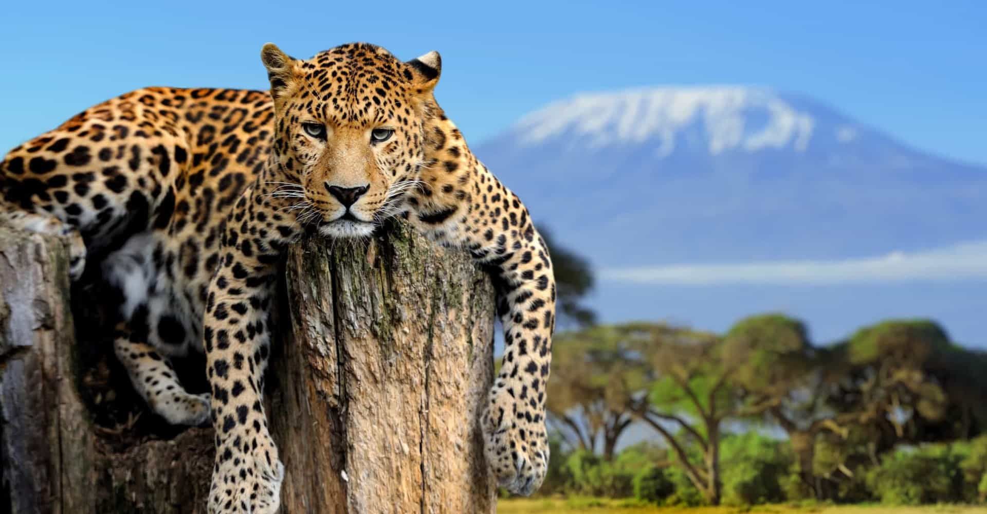 Tesouros africanos: veja as paisagens deslumbrantes deste continente!