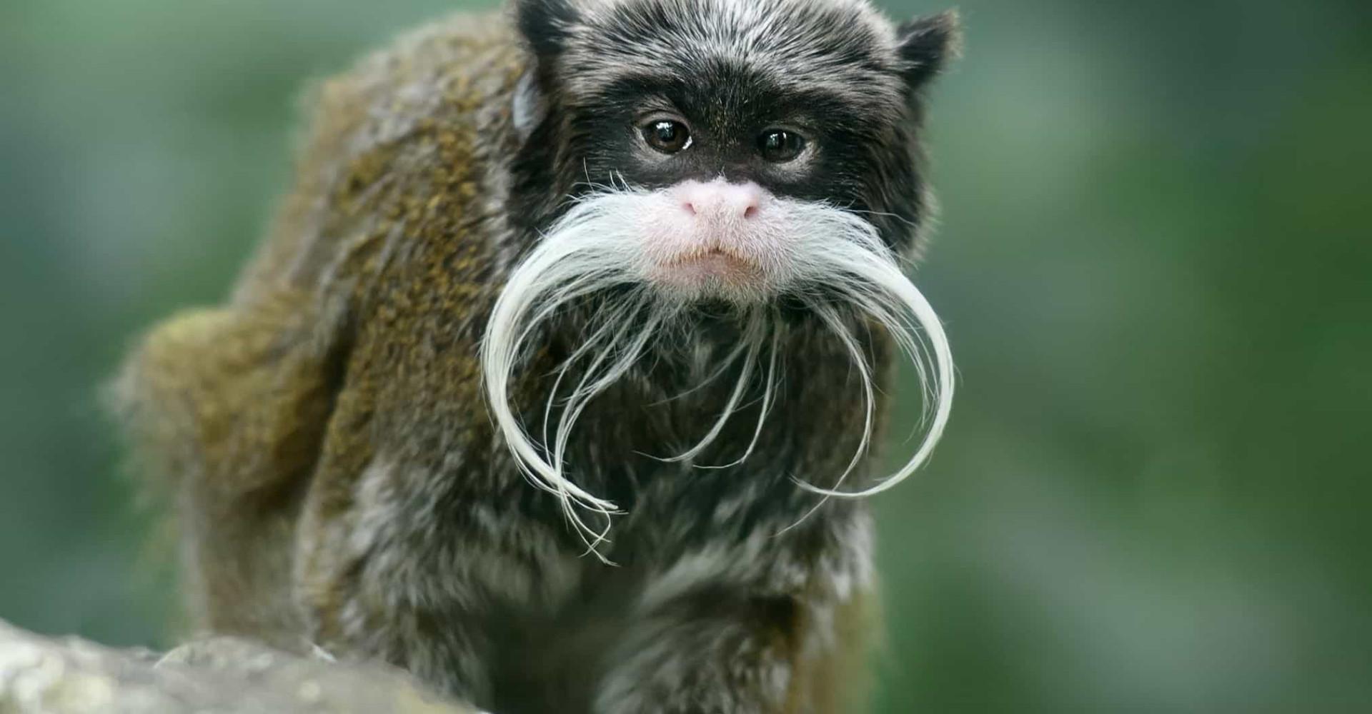 ¡Estas son las mejores barbas del reino animal!