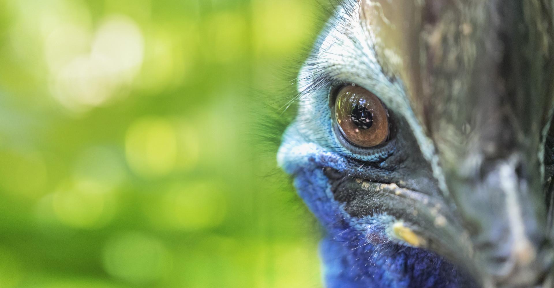 Australia's endangered animals
