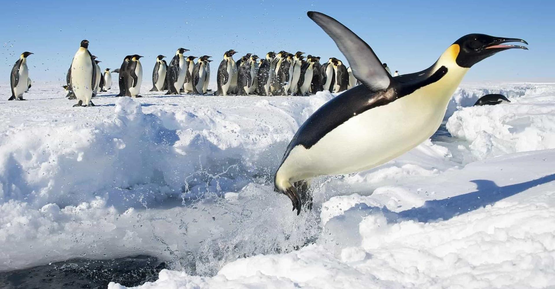 Antarktis: vill og vakker natur