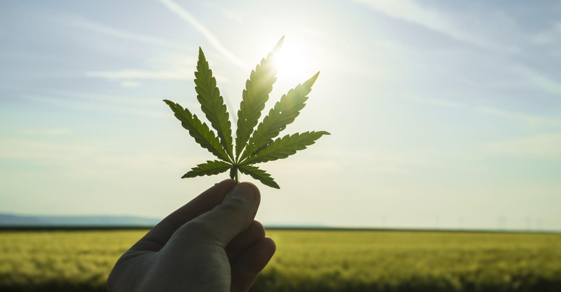 In diesen Ländern ist Marihuana bereits legal