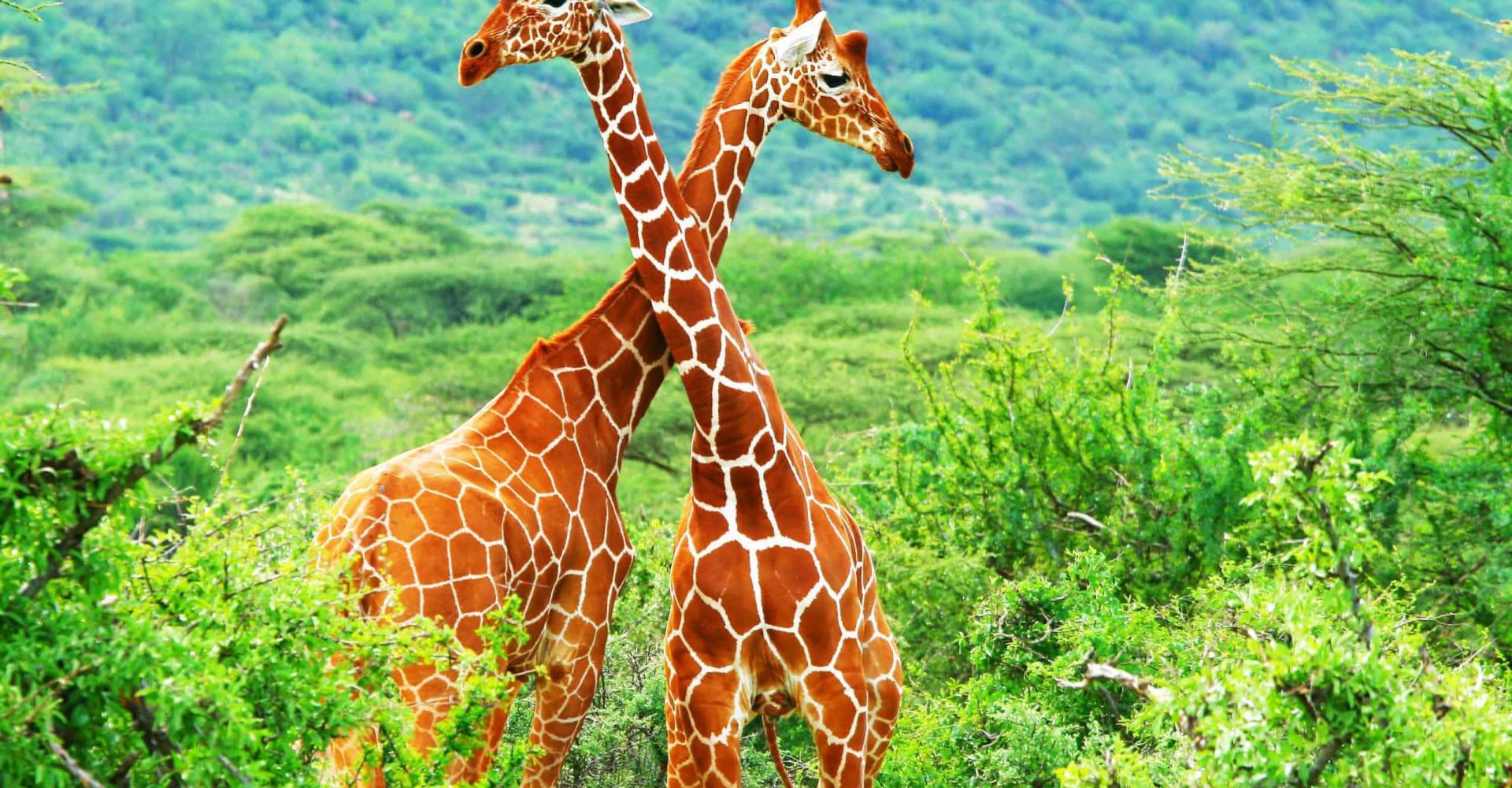 Die verrücktesten Paarungsrituale im Tierreich