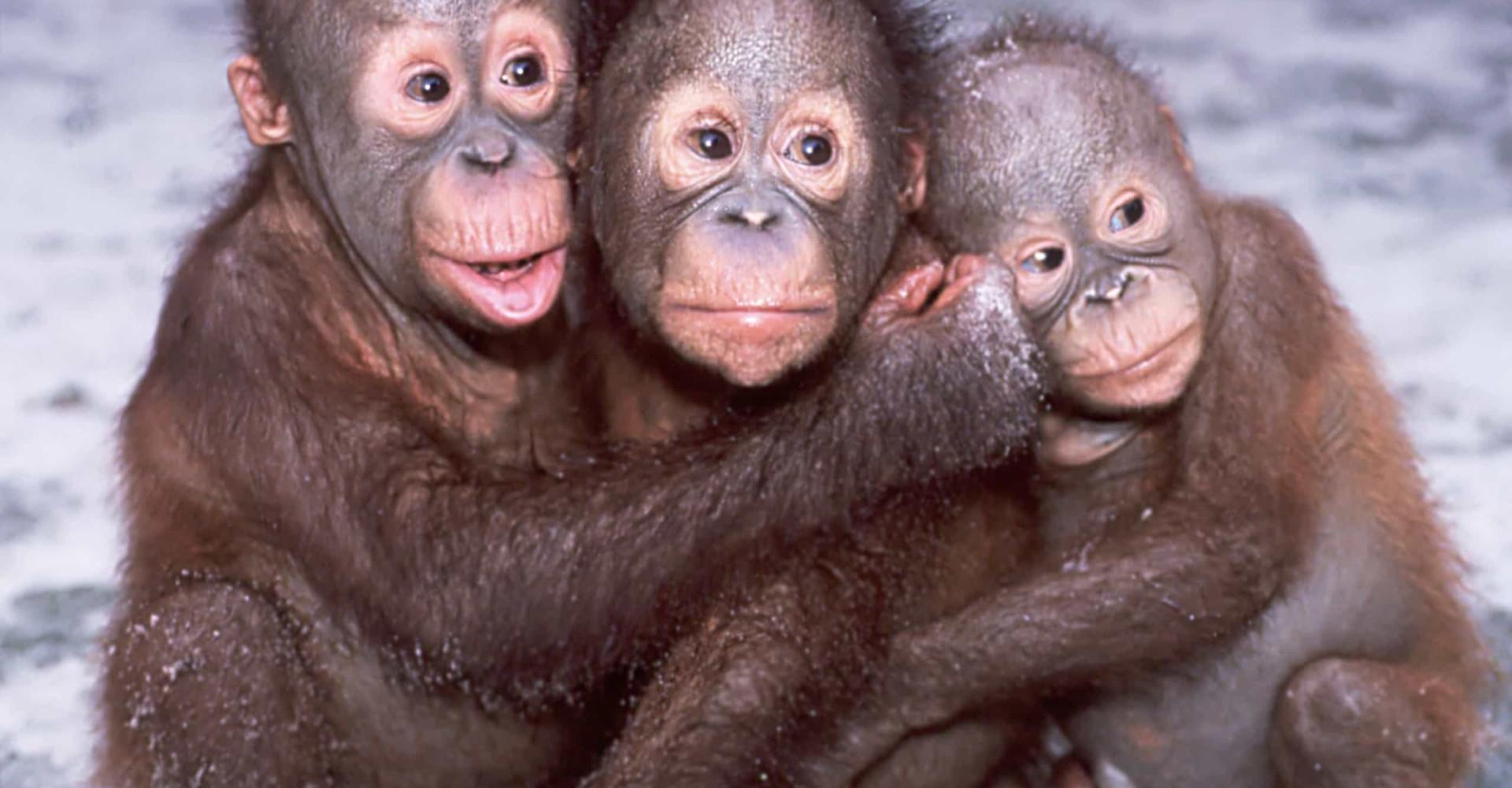 Broodje aap: veelvoorkomende misvattingen over dieren