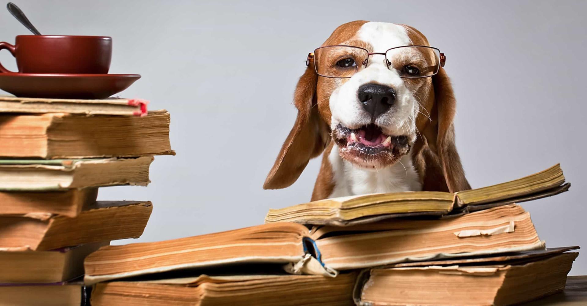 Quanto è intelligente il tuo cane? Questa classifica te lo dirà!
