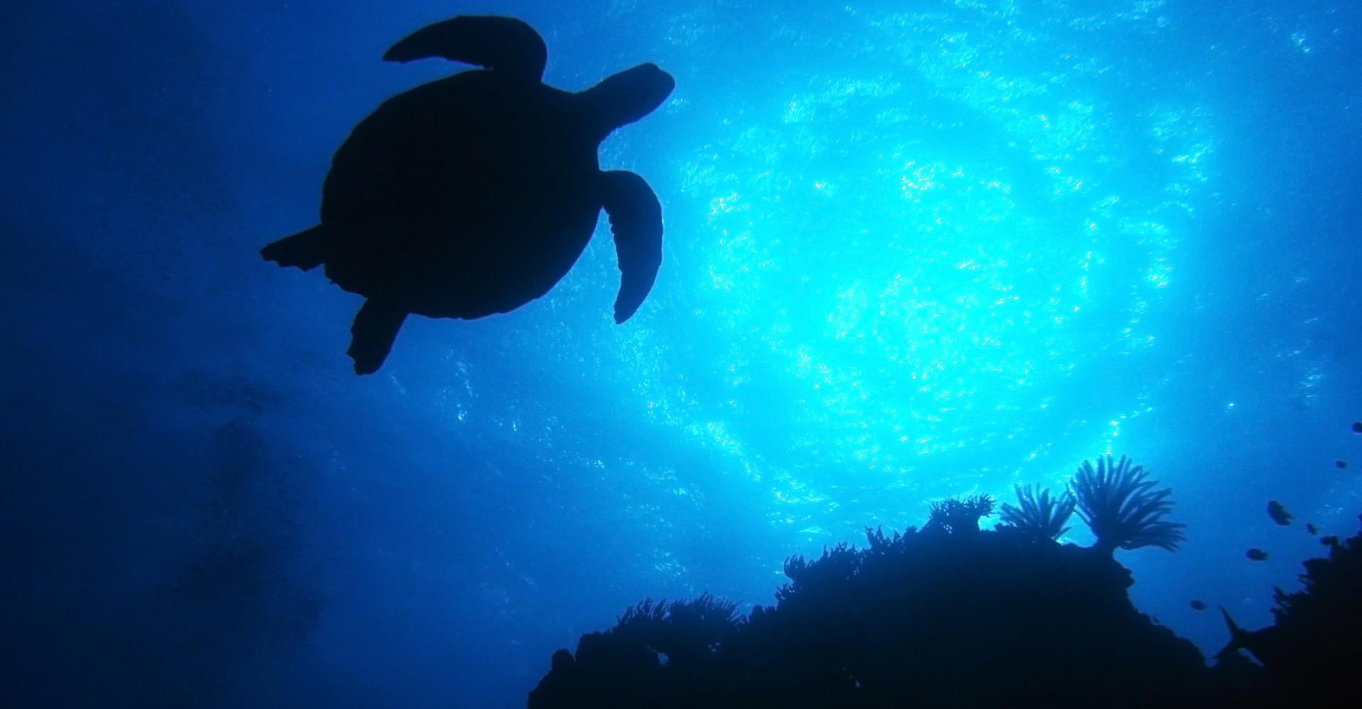 Deep dive: Australia's best scuba spots