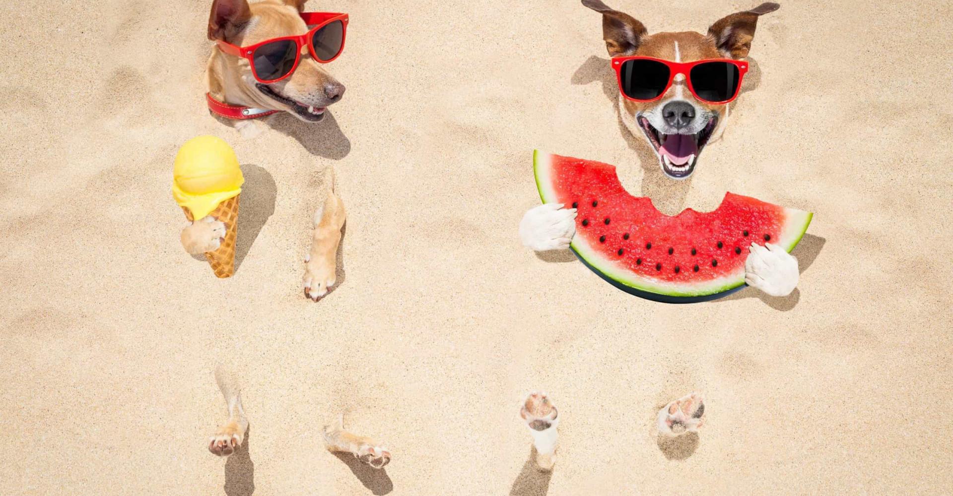 L'eau: l'arme des animaux pour lutter contre la chaleur