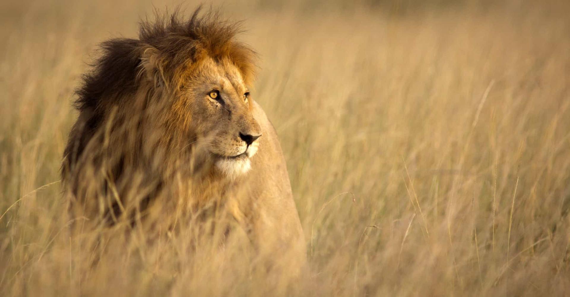 Imminent risk: animals under threat of extinction