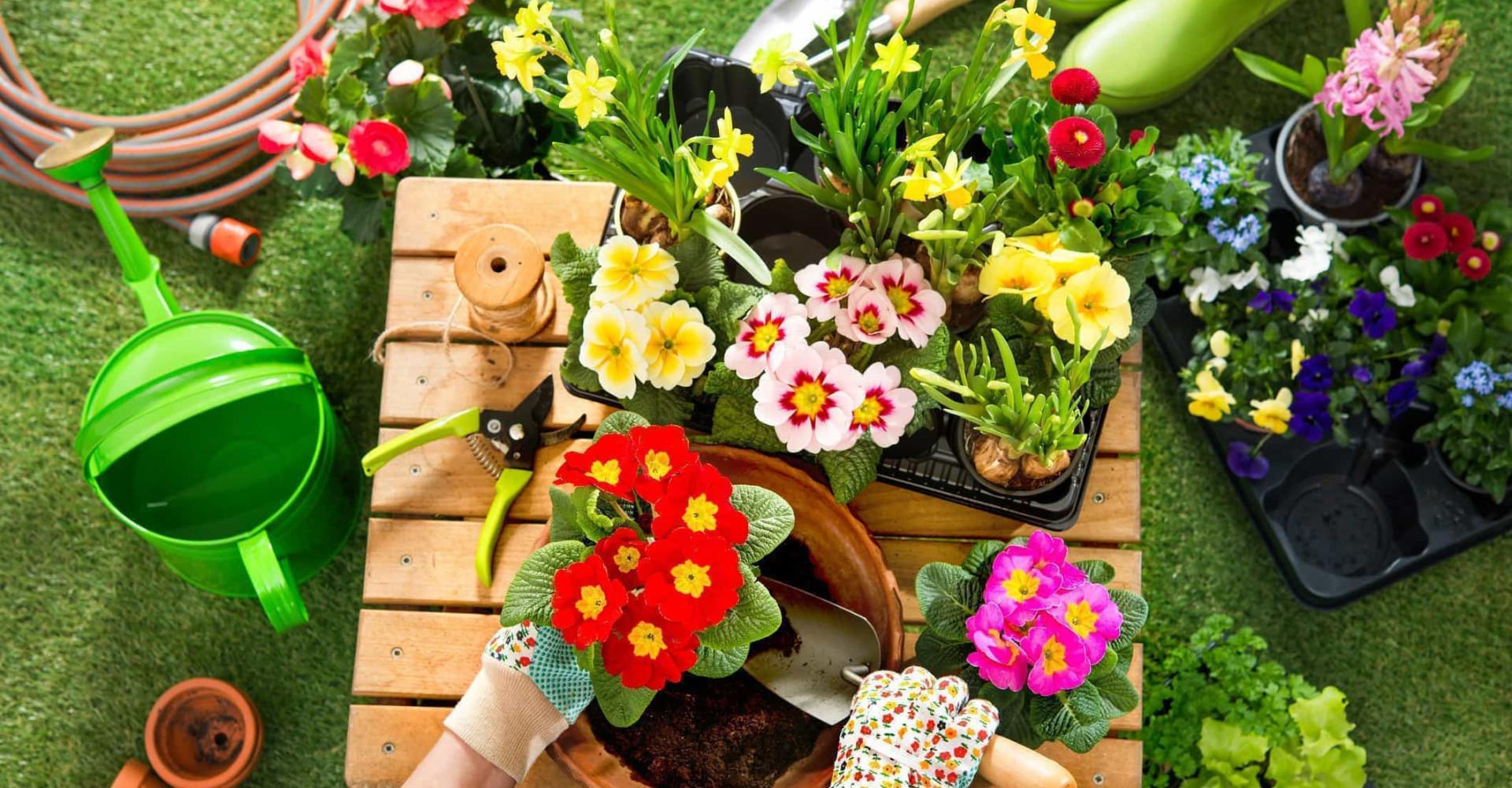 Tutte le alternative naturali ai pesticidi