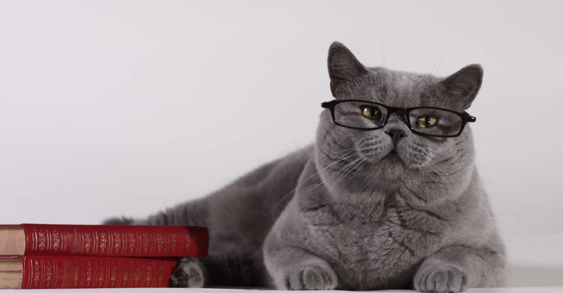 Dit wist je nog niet over katten