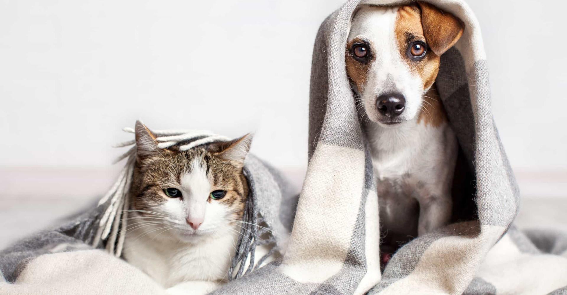Les races de chiens à adopter si on a déjà un chat