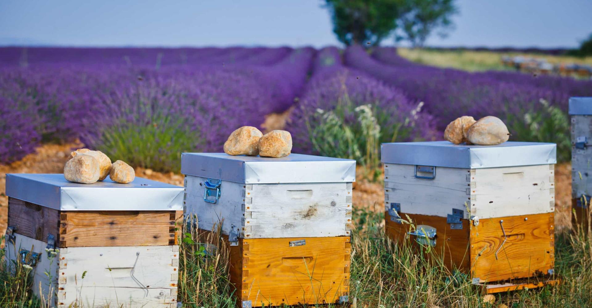 Le miel français: un trésor en danger