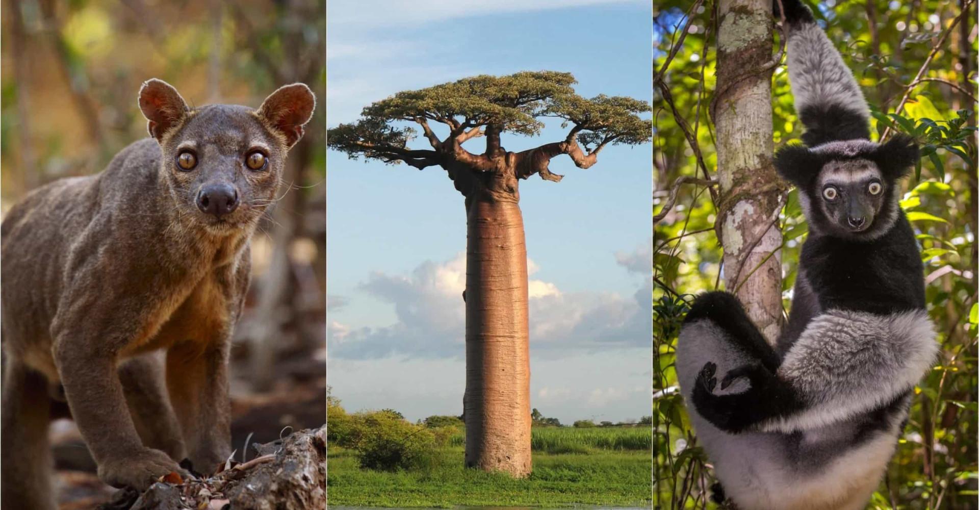 Tutustu suurenmoiseen Madagaskariin!