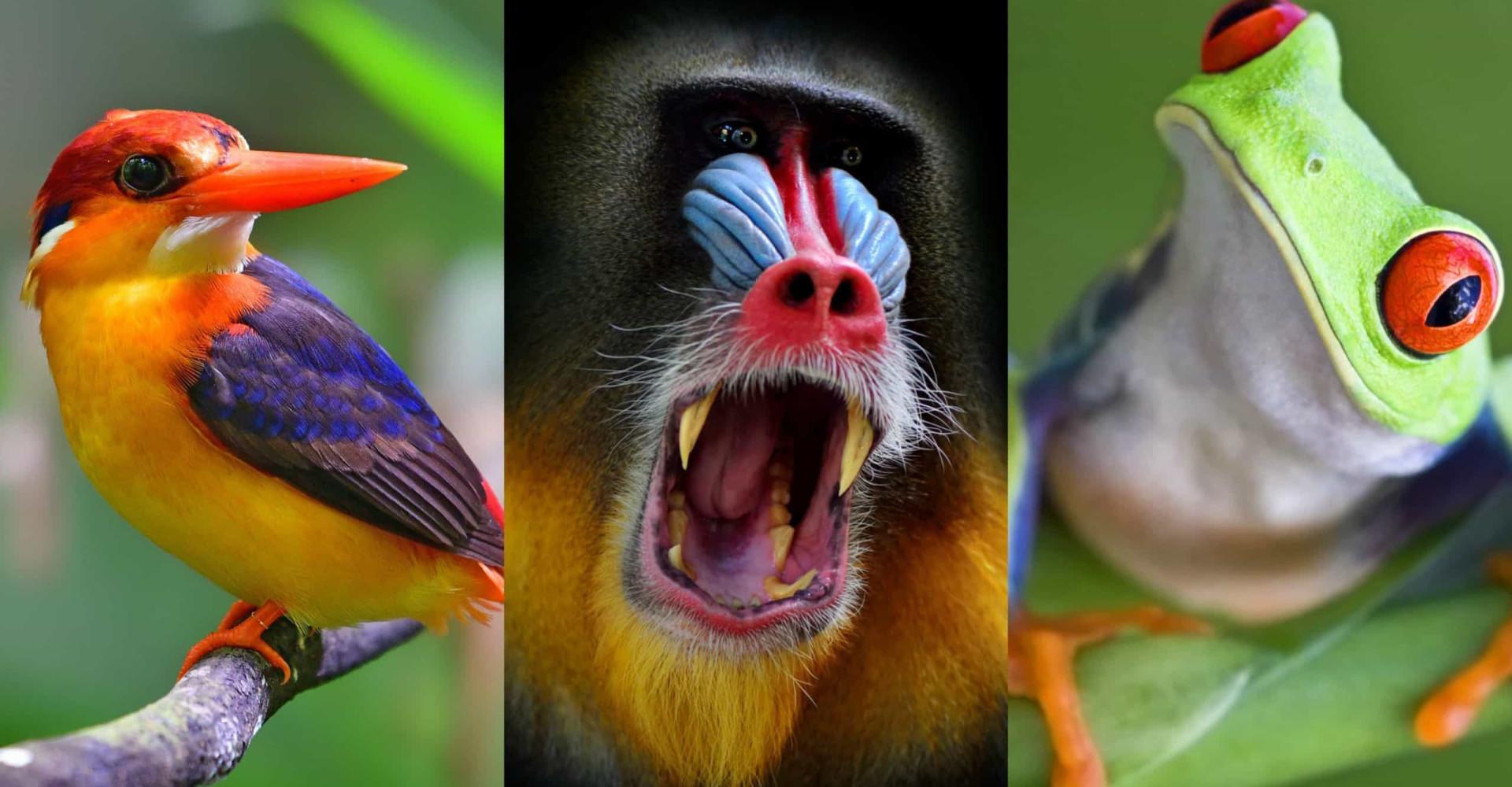 Kaipaatko väriä päivääsi? Katso kuvat maailman koreimmista villieläimistä
