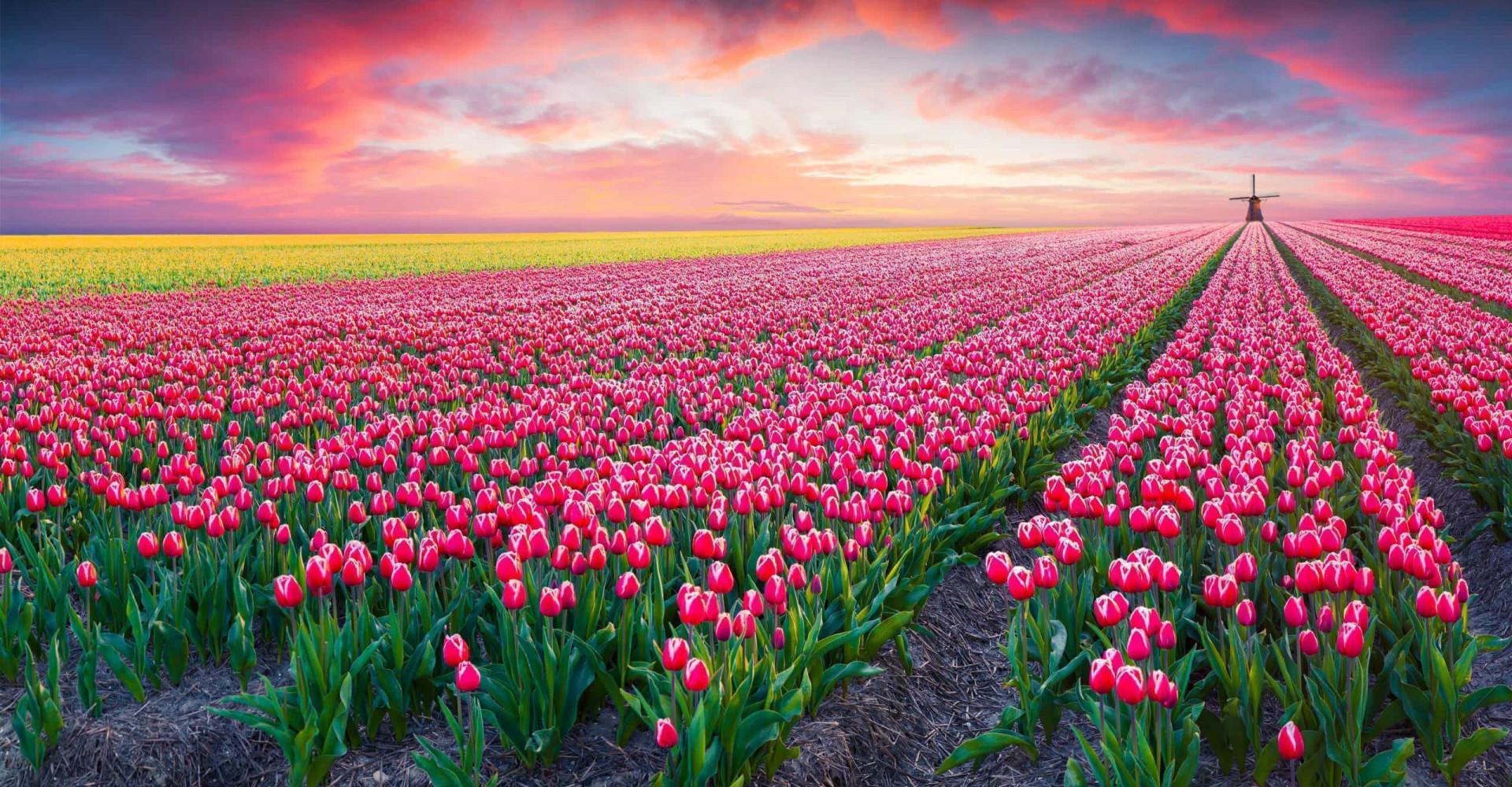60 foto per celebrare la meraviglia della primavera