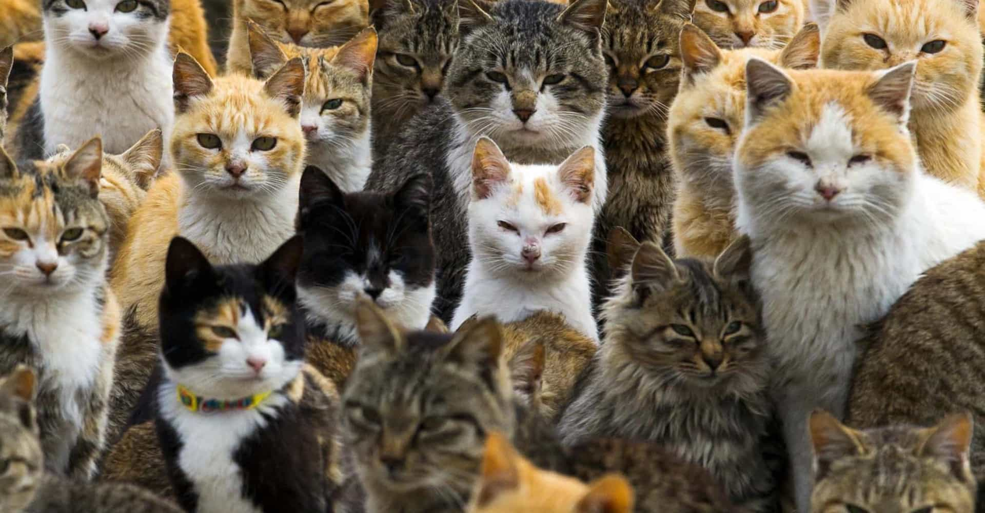 Peek inside Japan's surreal island of cats