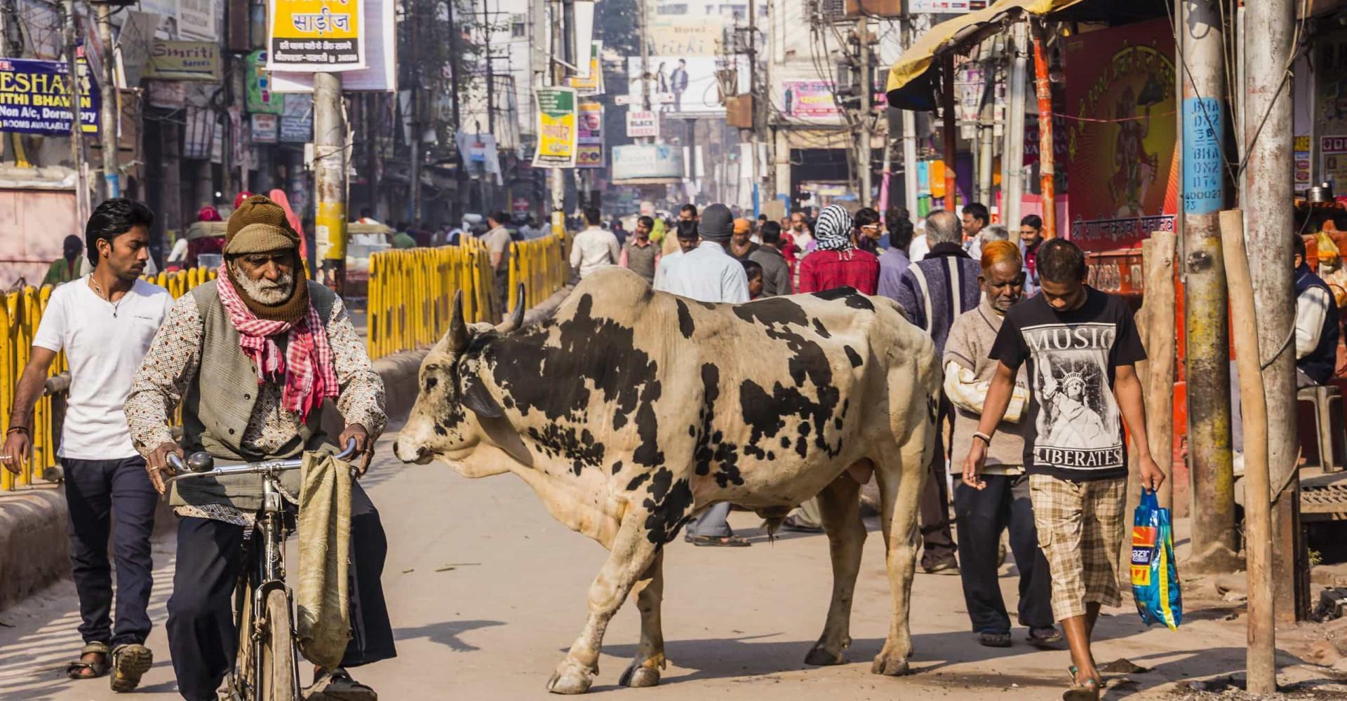 Merkilliset eläinkuvat Intian kaupungeista