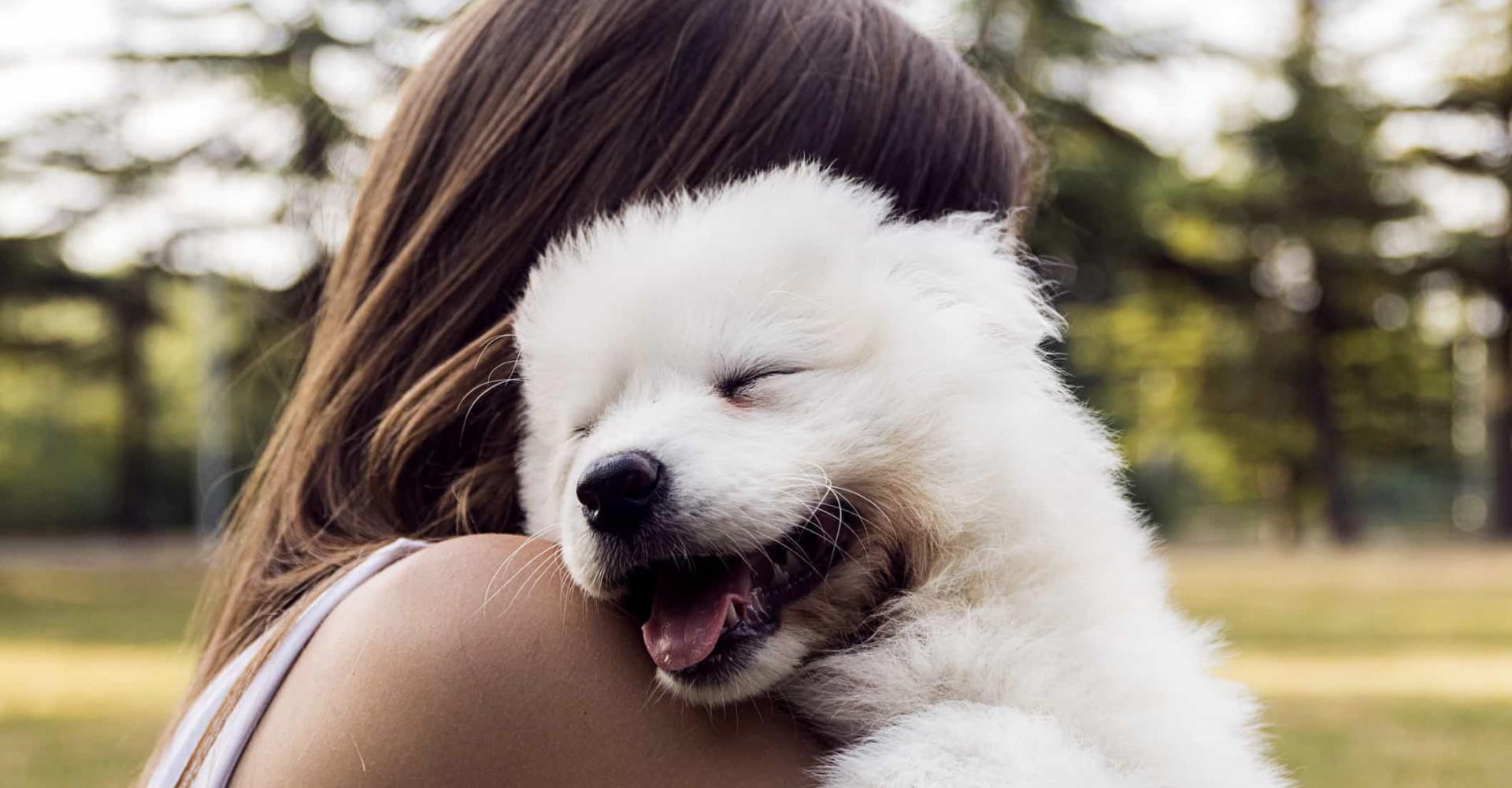 Sådan kommunikerer hunde med deres ejere