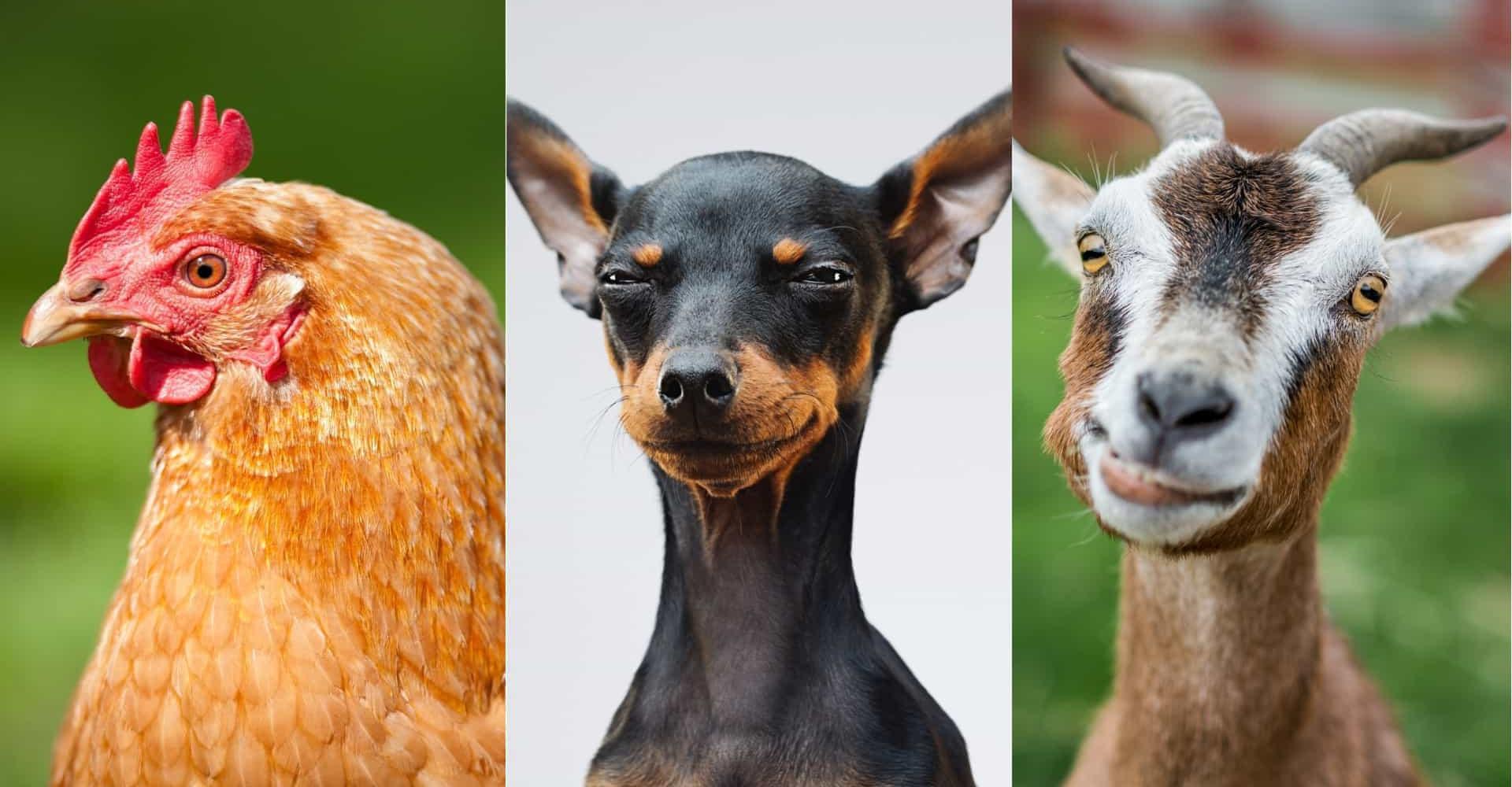Che età possono raggiungere questi animali?