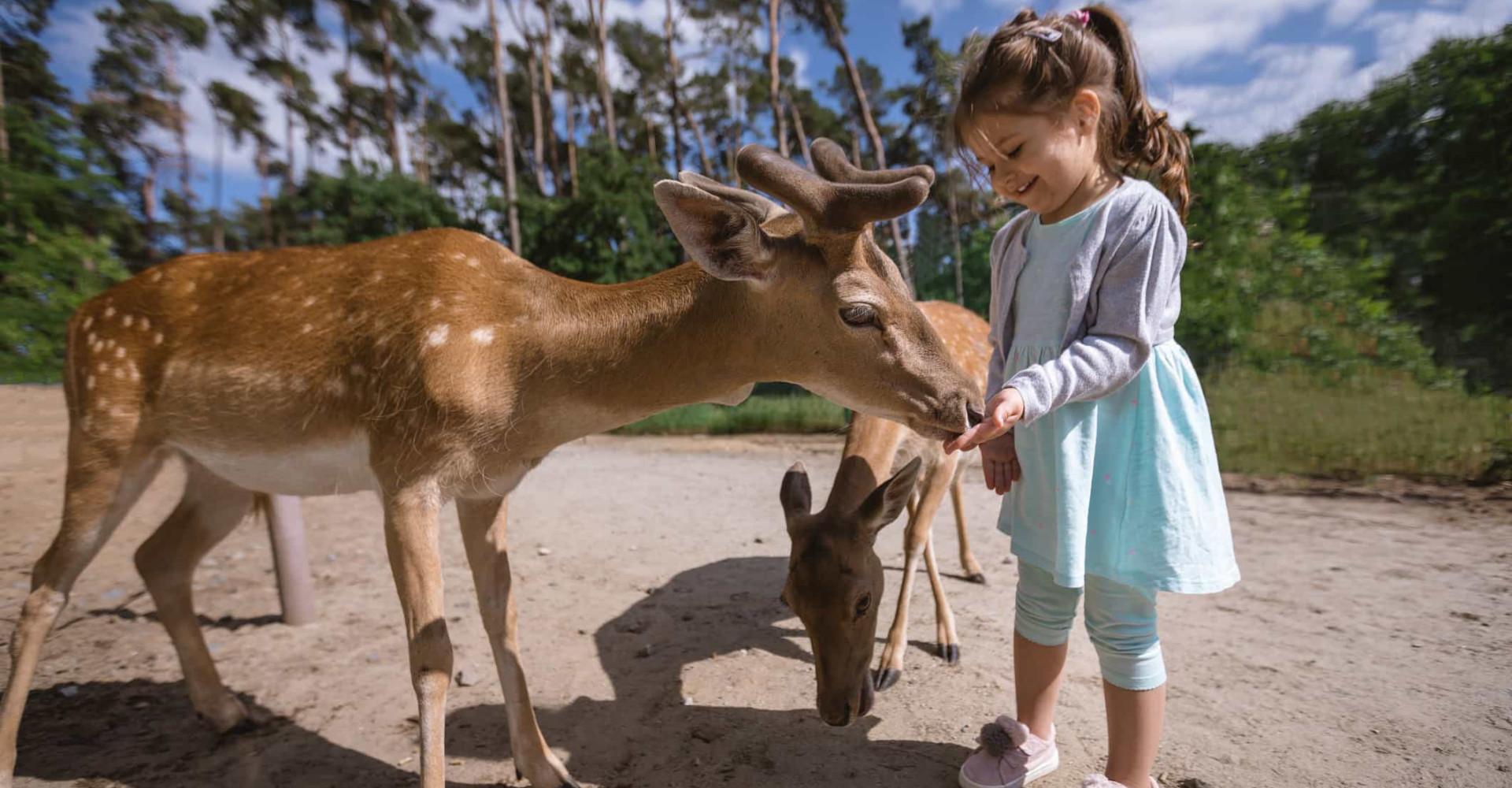 Regno animale: quali sono i mammiferi più socievoli con l'uomo?