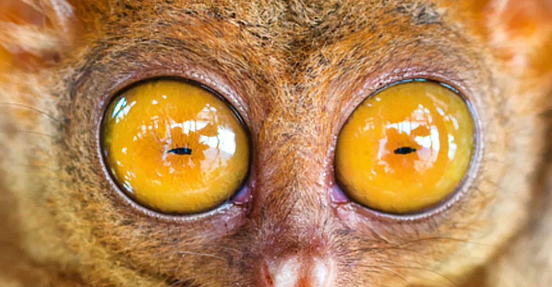 Kellä on eläinkunnan upeimmat silmät?