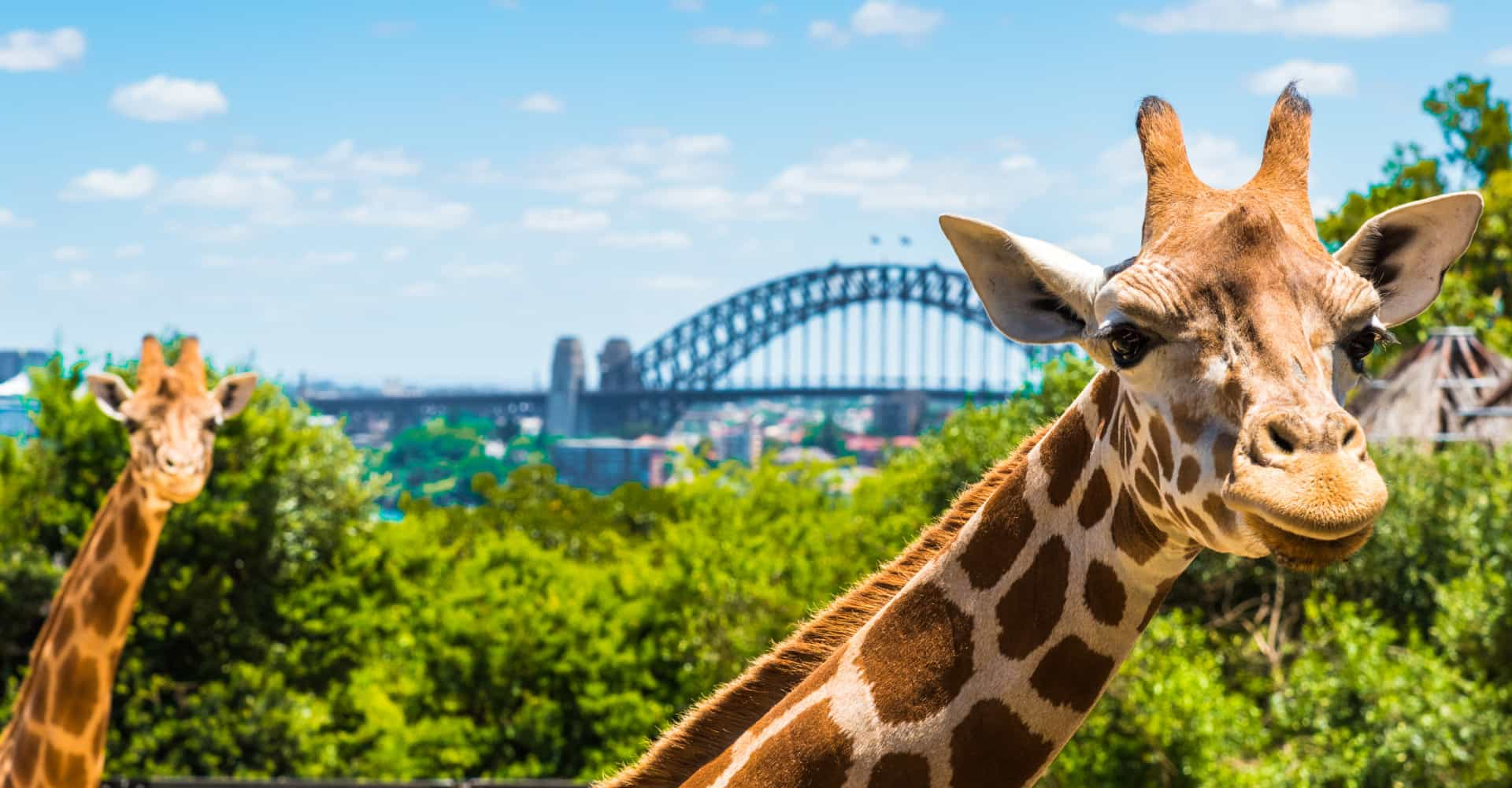 Aussie zoos holding twilight gigs this summer