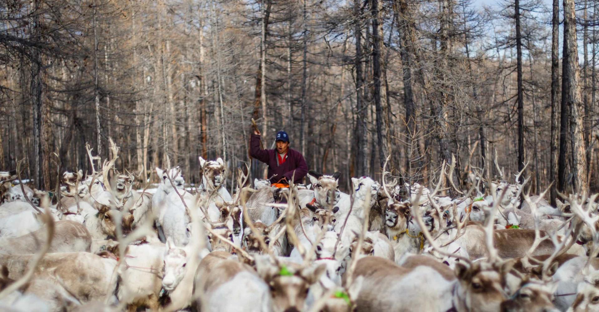 L'incroyable quotidien des éleveurs de rennes de Mongolie