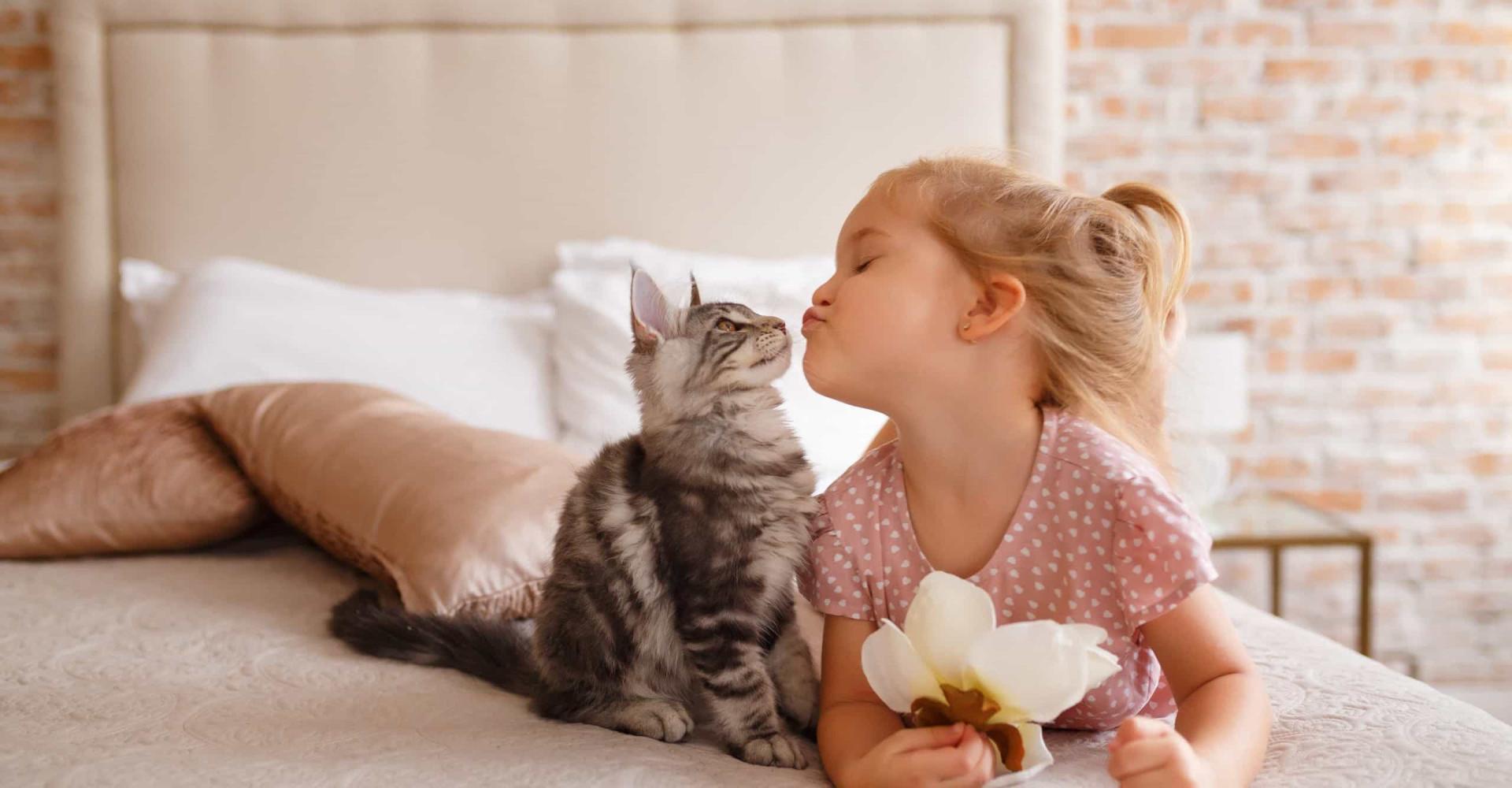 Ces races de chats font de parfaits animaux de compagnie