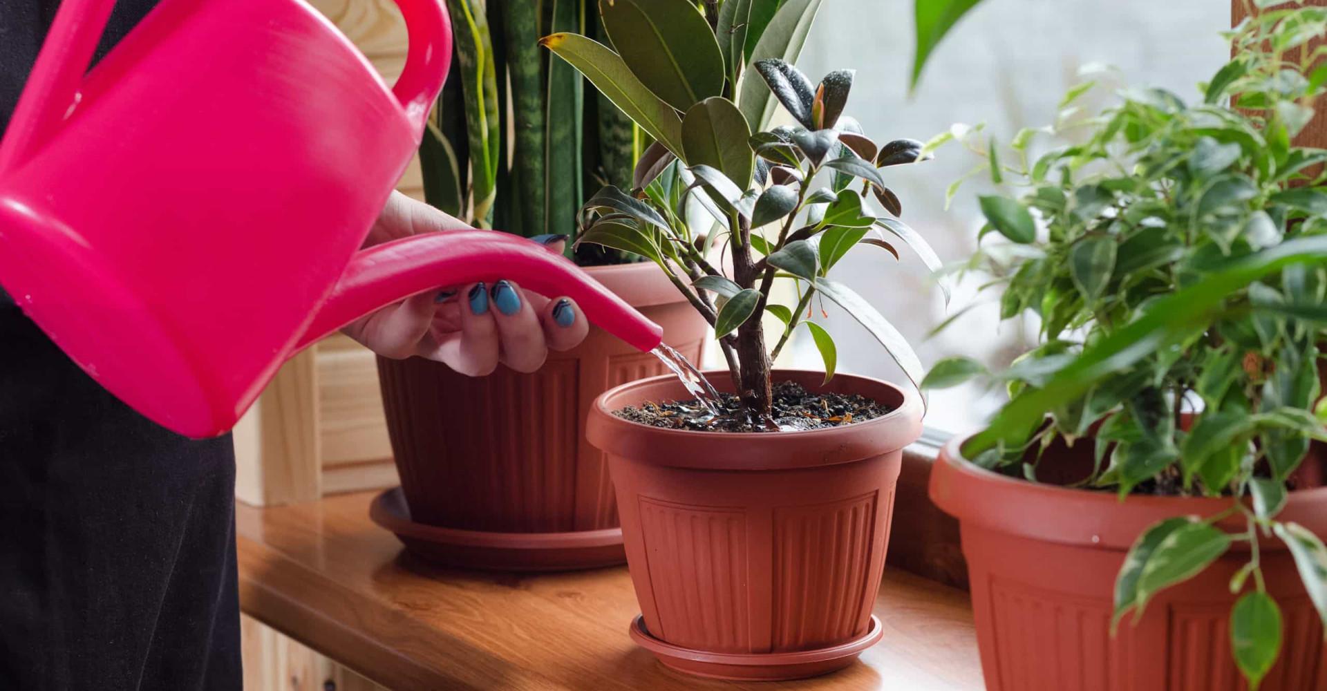 So überleben Zimmerpflanzen die Urlaubszeit