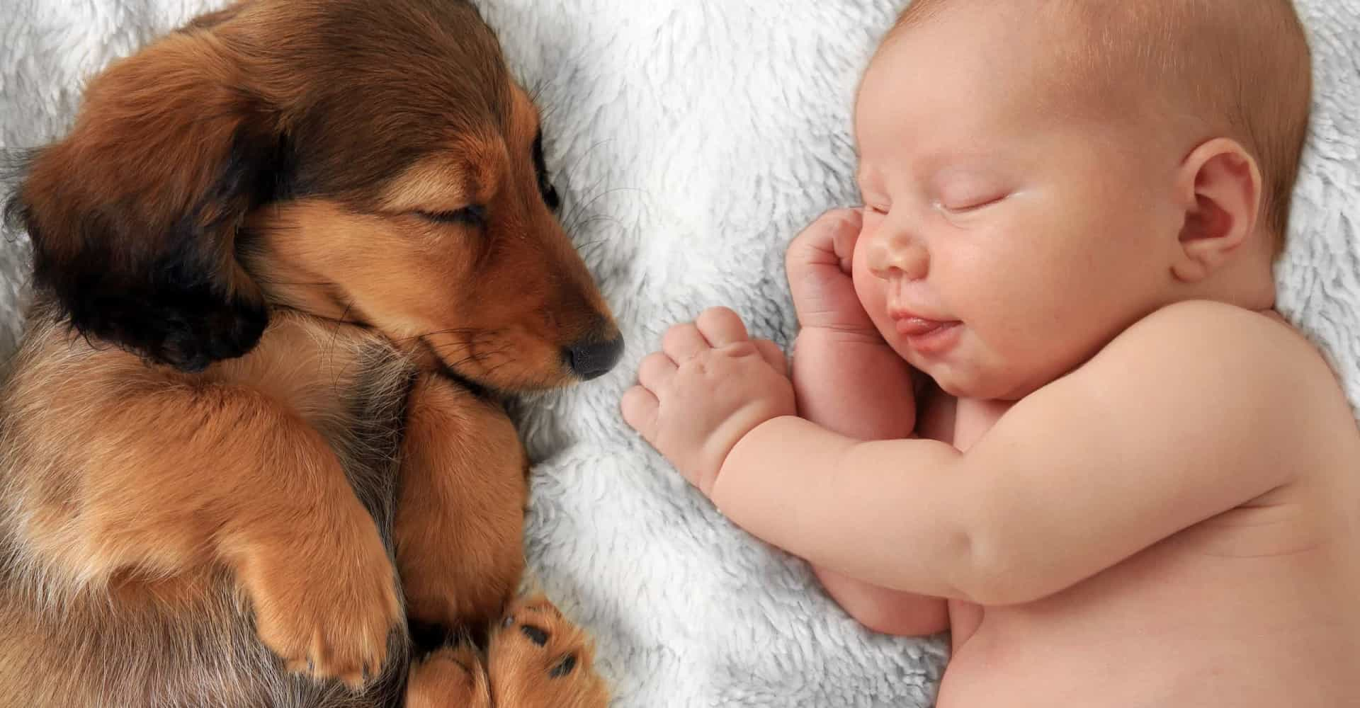 Baby's best friend: Best dog breeds to have around infants
