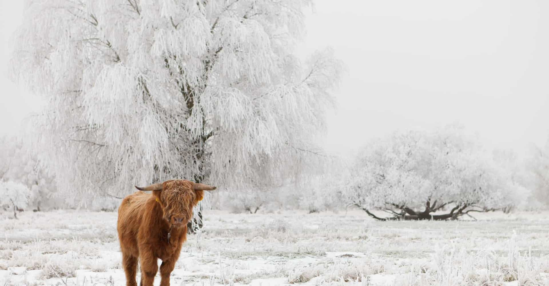 De mooiste winterwandelingen in Nederland