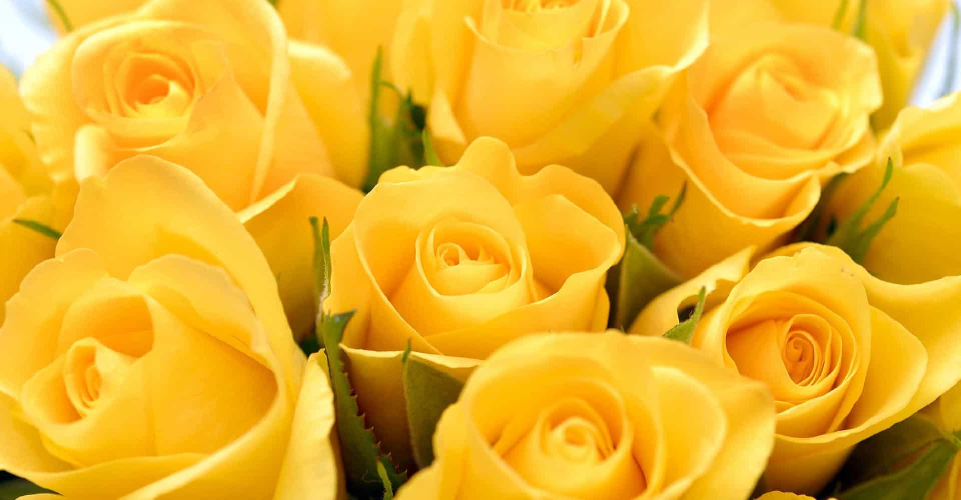 Never offer yellow roses to the love of your life