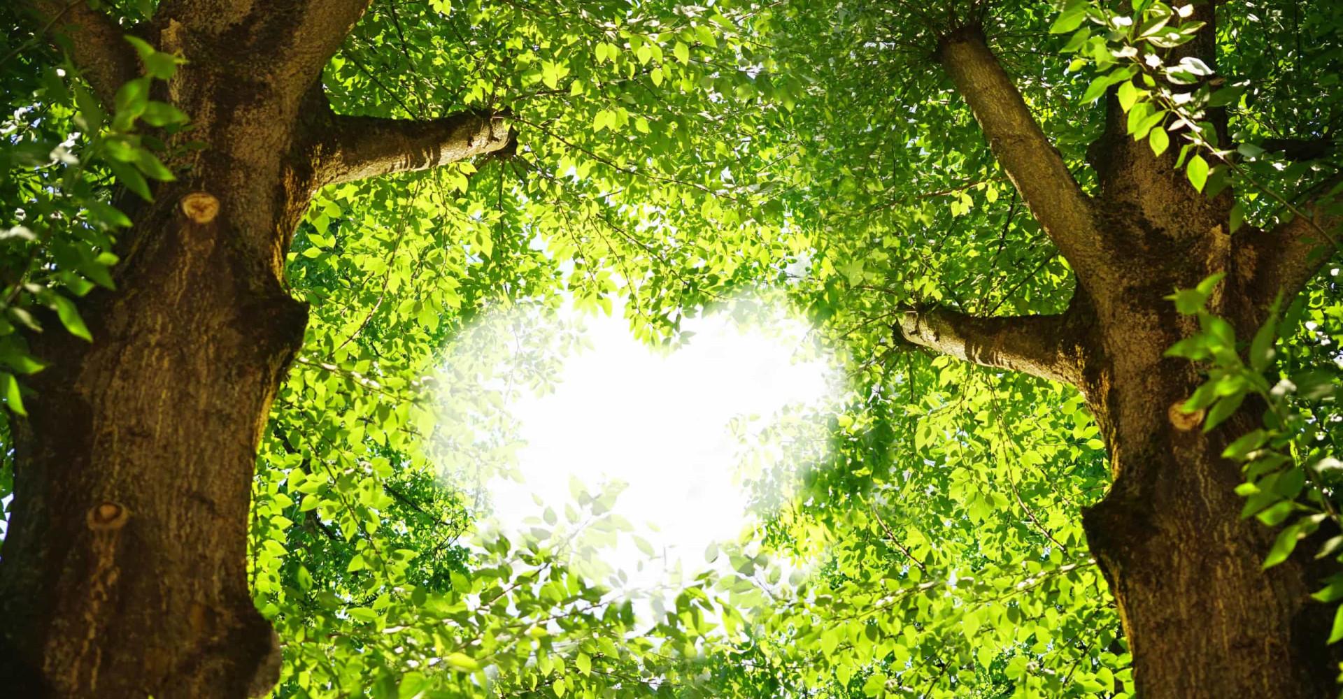 Hoe groen is jouw hart?