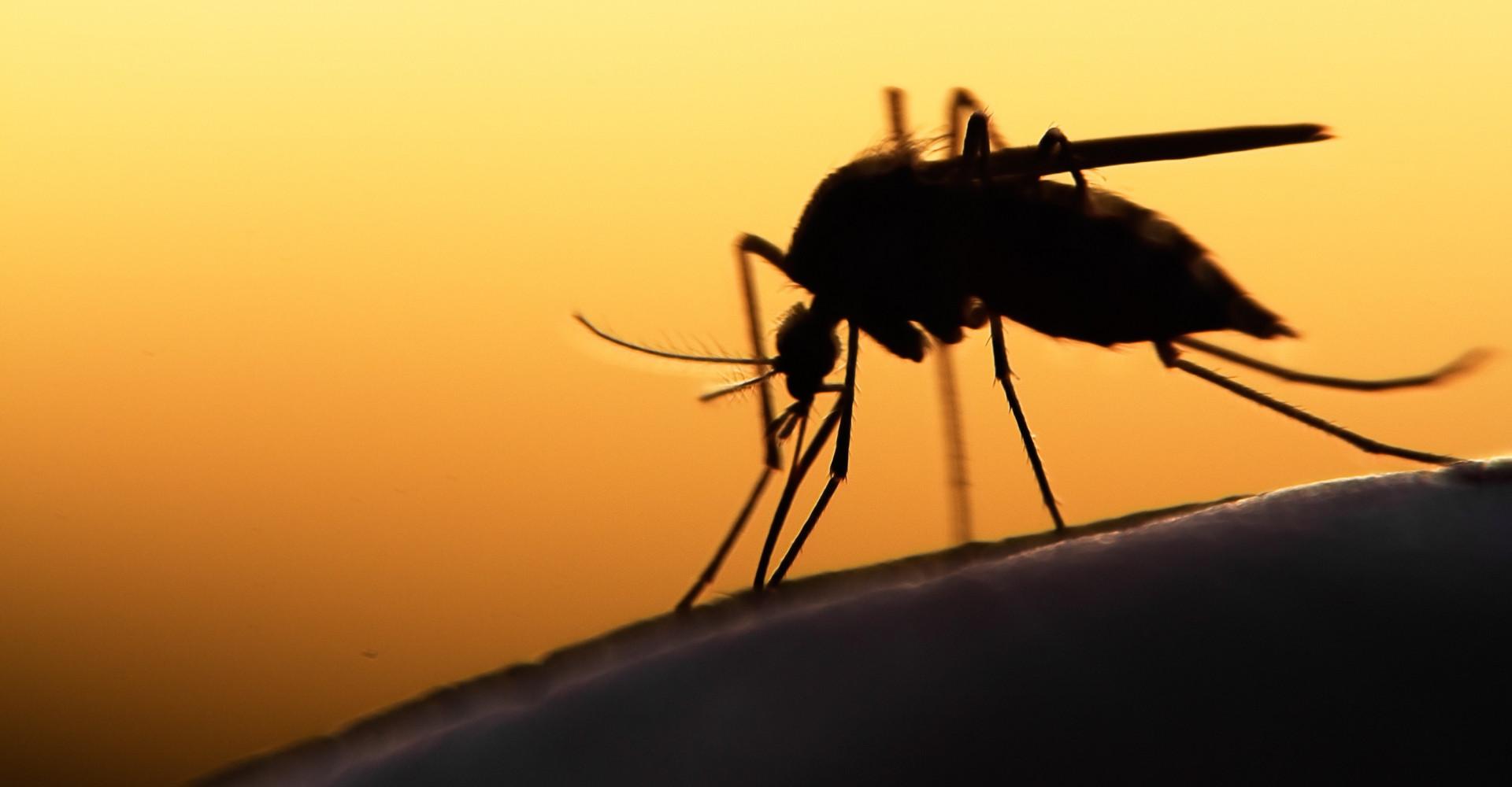 Shhh! Kunnen muggen je horen?