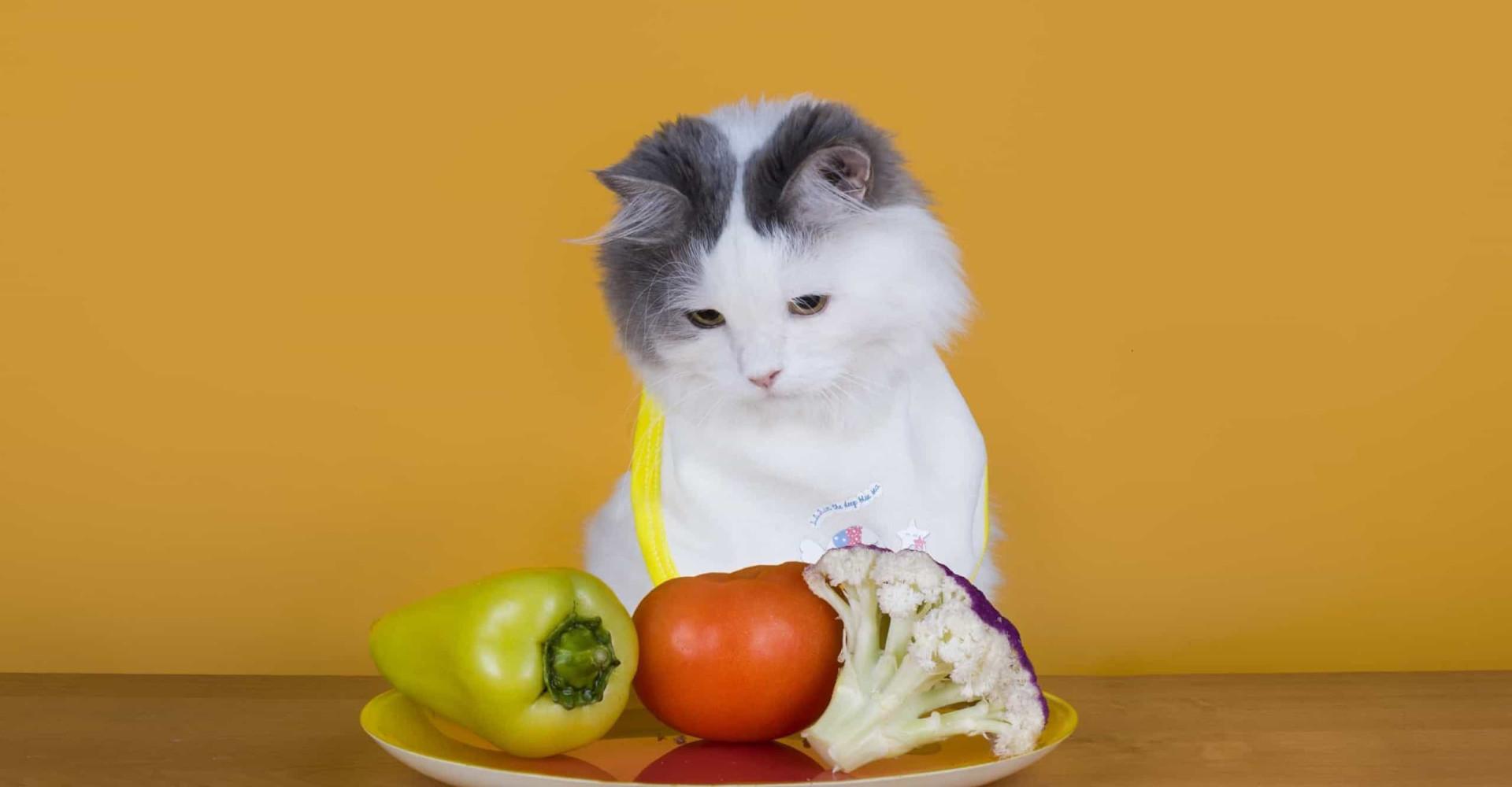 Kunnen honden en katten veganistisch leven?