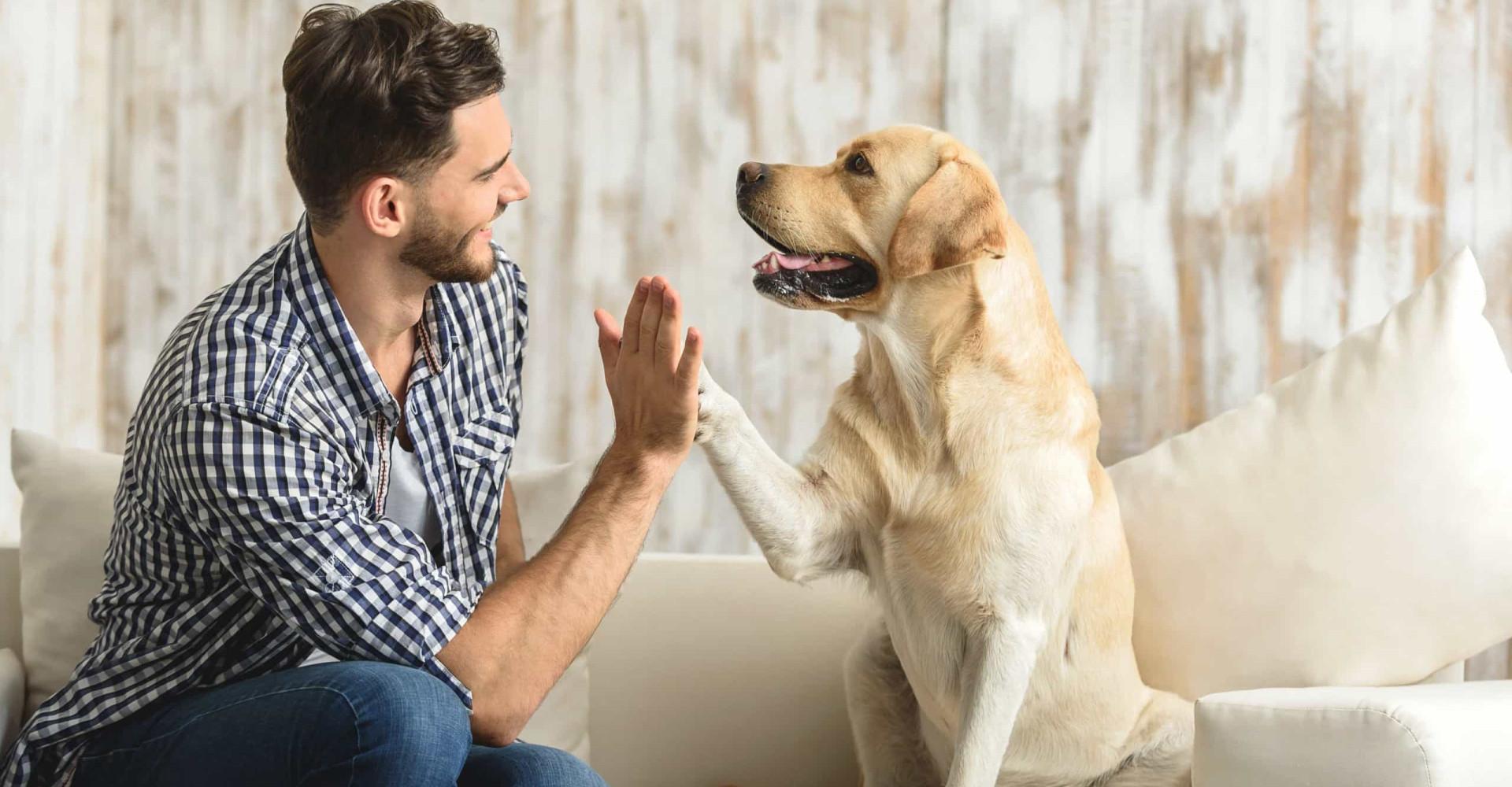 Doe deze dingen niet waar je hond bij is
