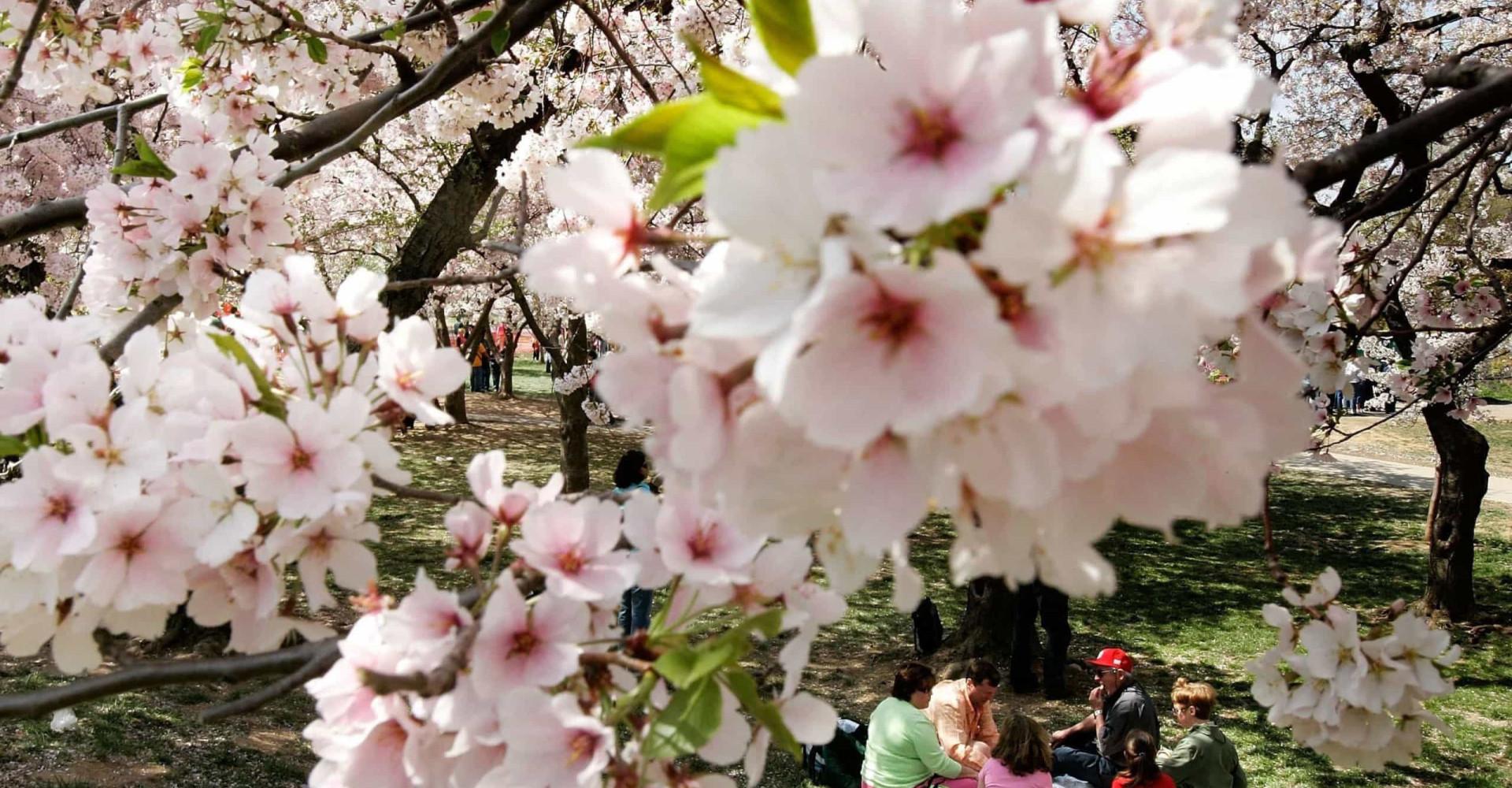 전세계의 아름다운 봄풍경 속으로!