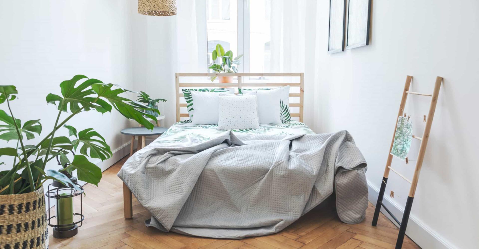 Dit zijn de ideale slaapkamerplanten