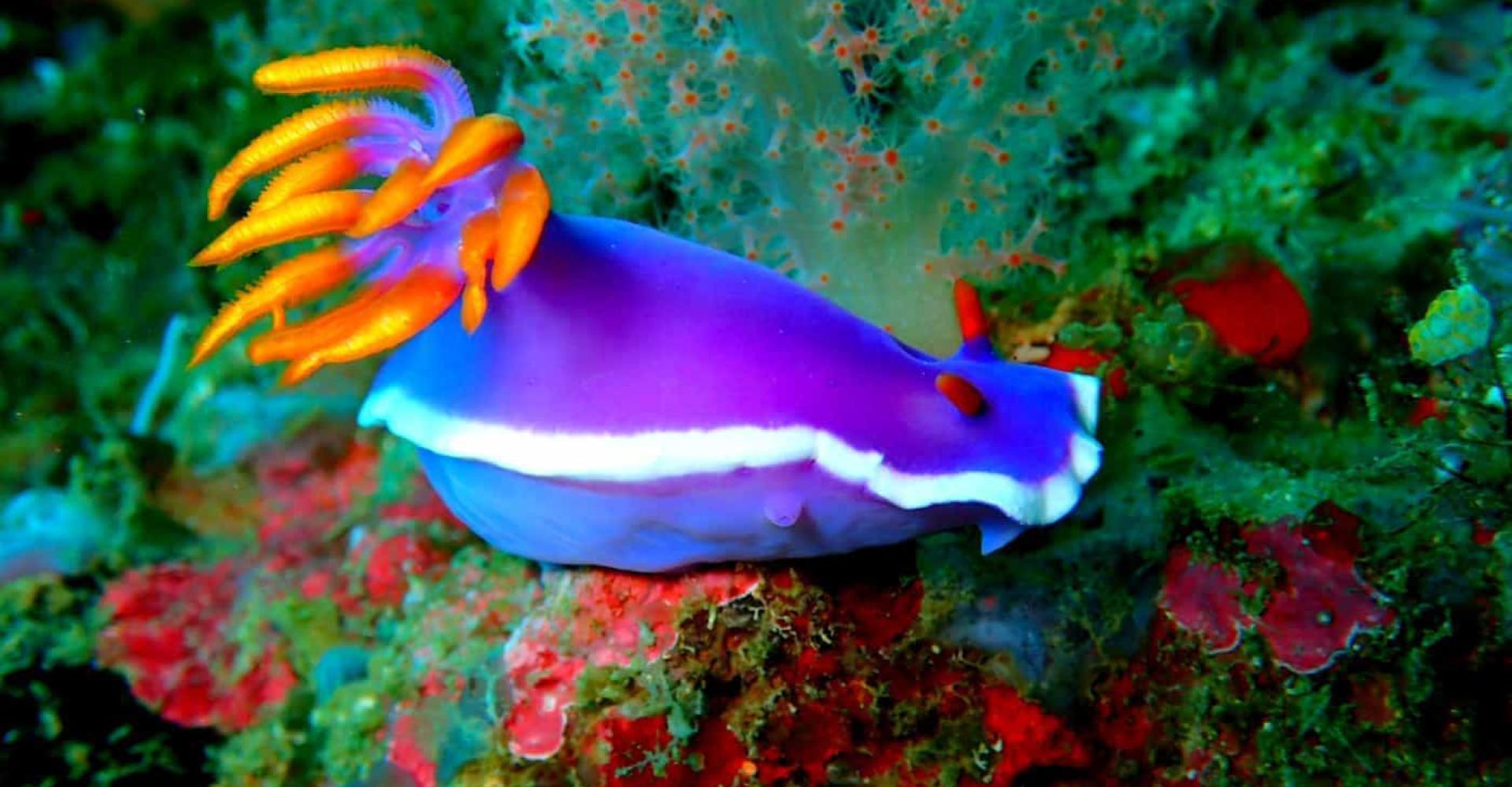 Merietanan uskomattoman värikäs maailma